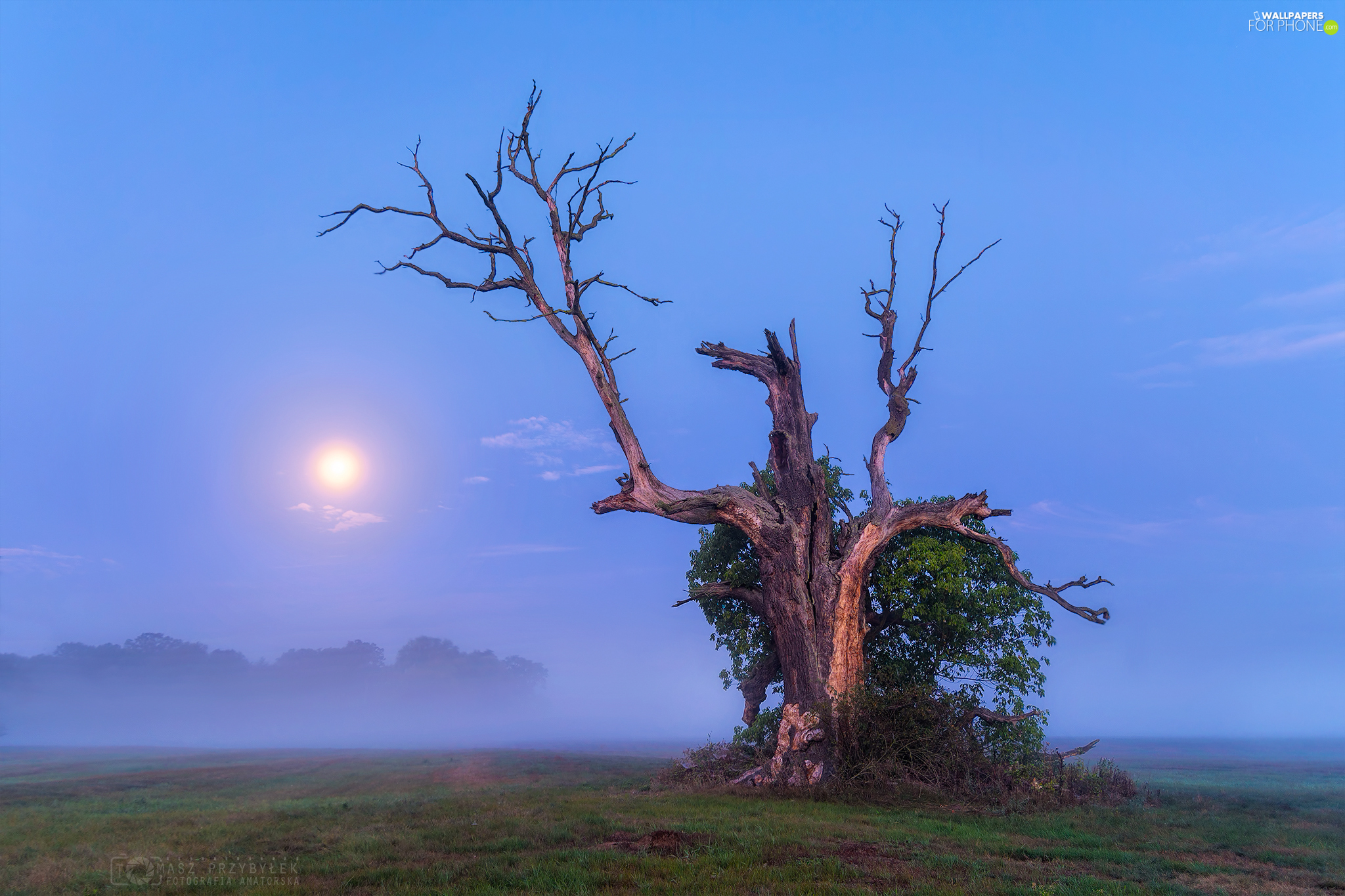trunk, trees, moon, Fog, oak, withered