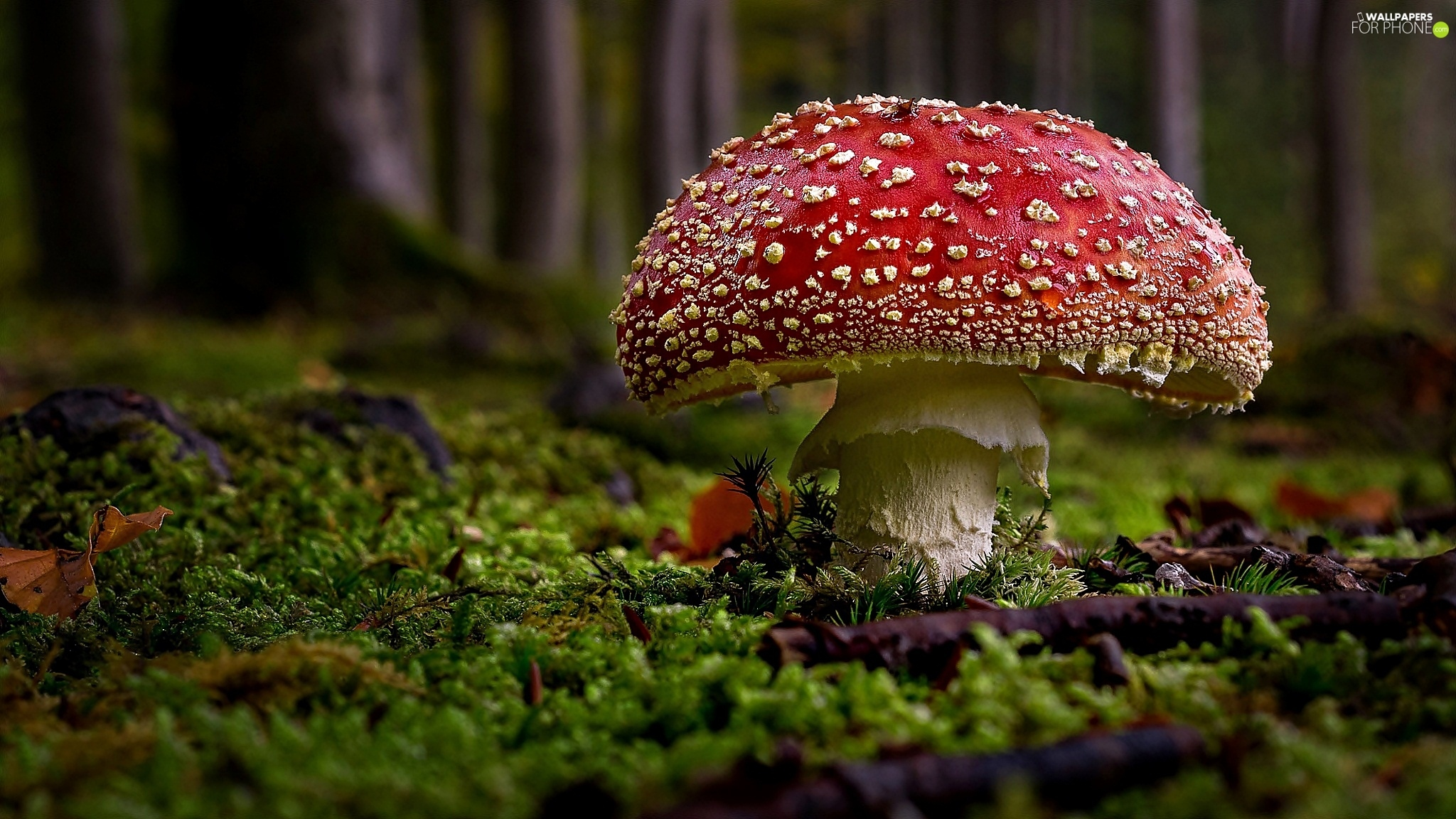 Mushrooms, litter, forest, toadstool