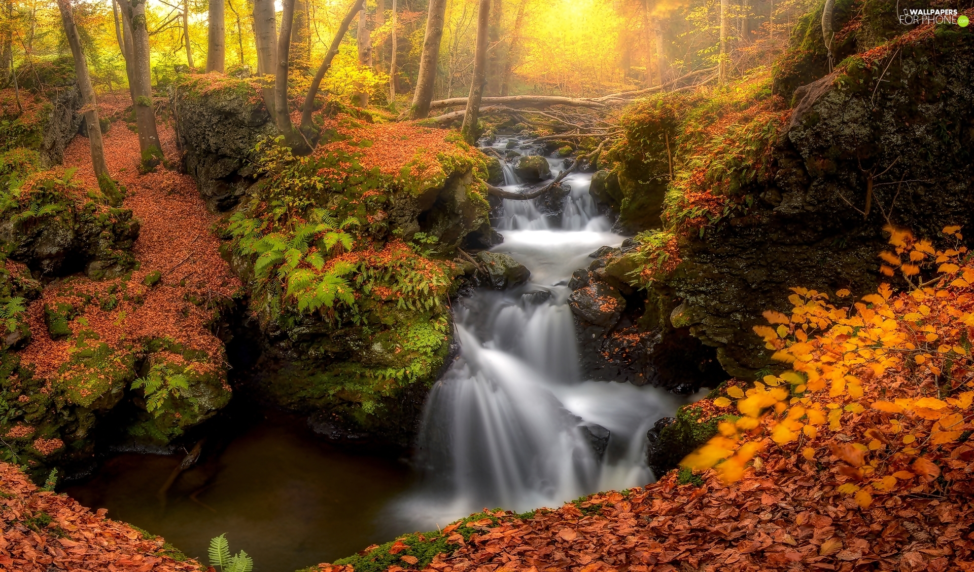 forest, waterfall, trees, viewes, Leaf, autumn, Stones, fallen, rocks