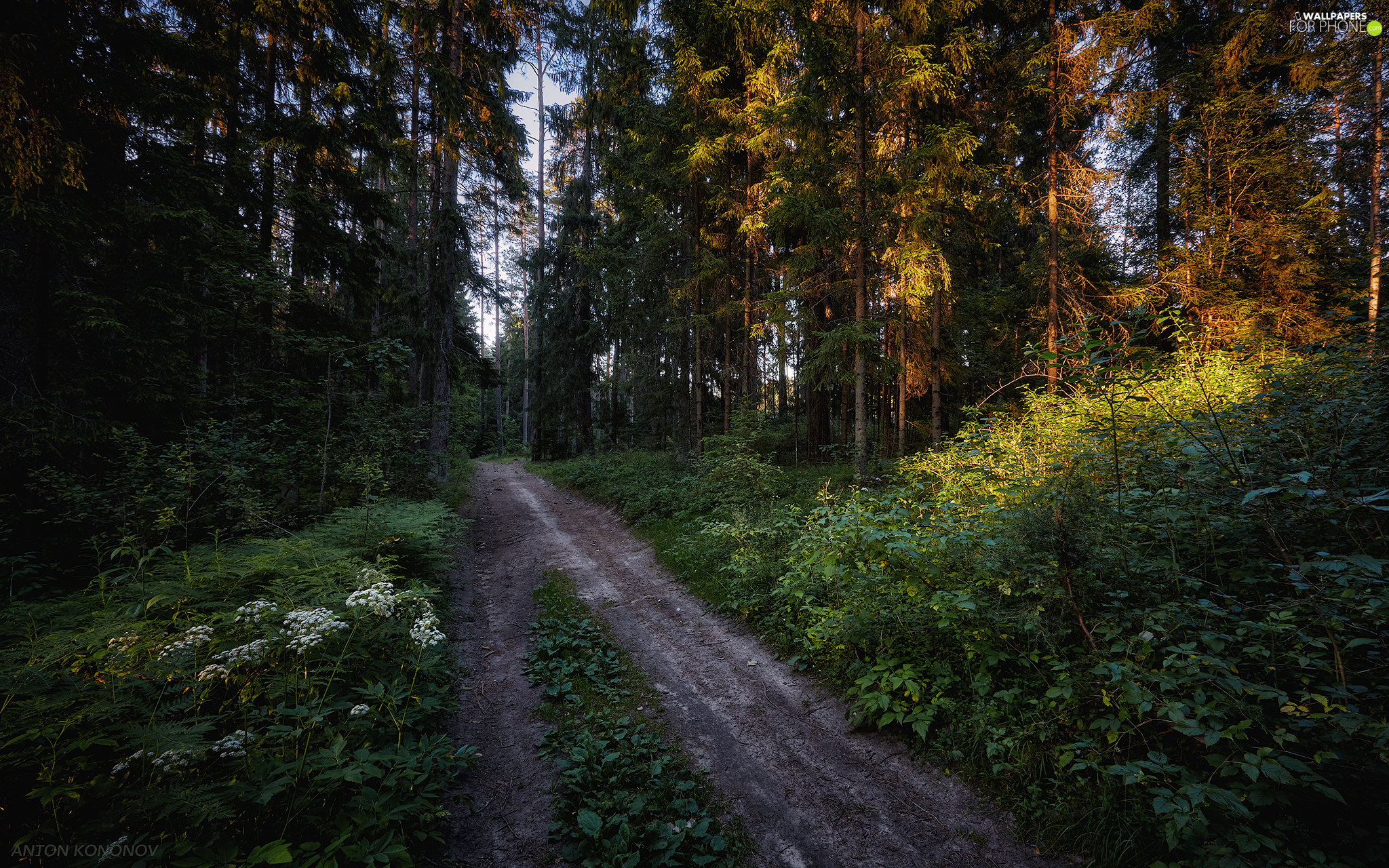 Way, Flowers, morning, forest