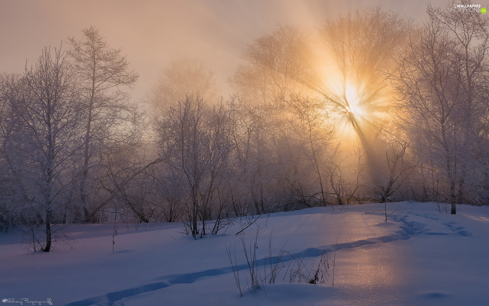frosty, winter, viewes, light breaking through sky, trees, Fog