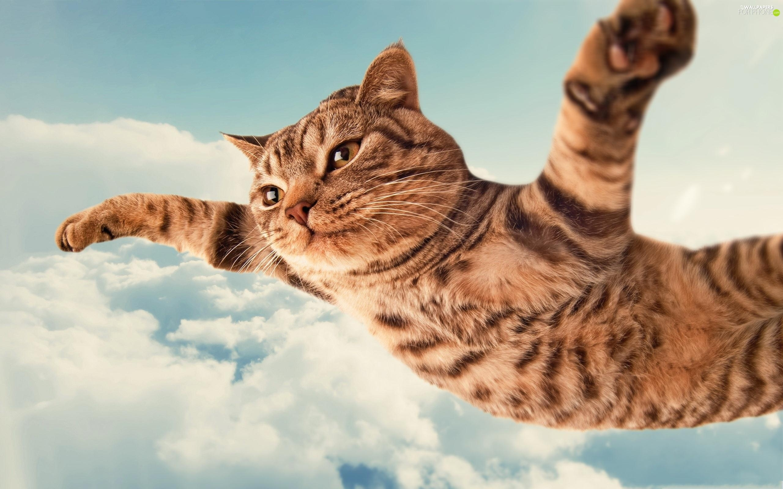 flying, clouds, Funny, cat