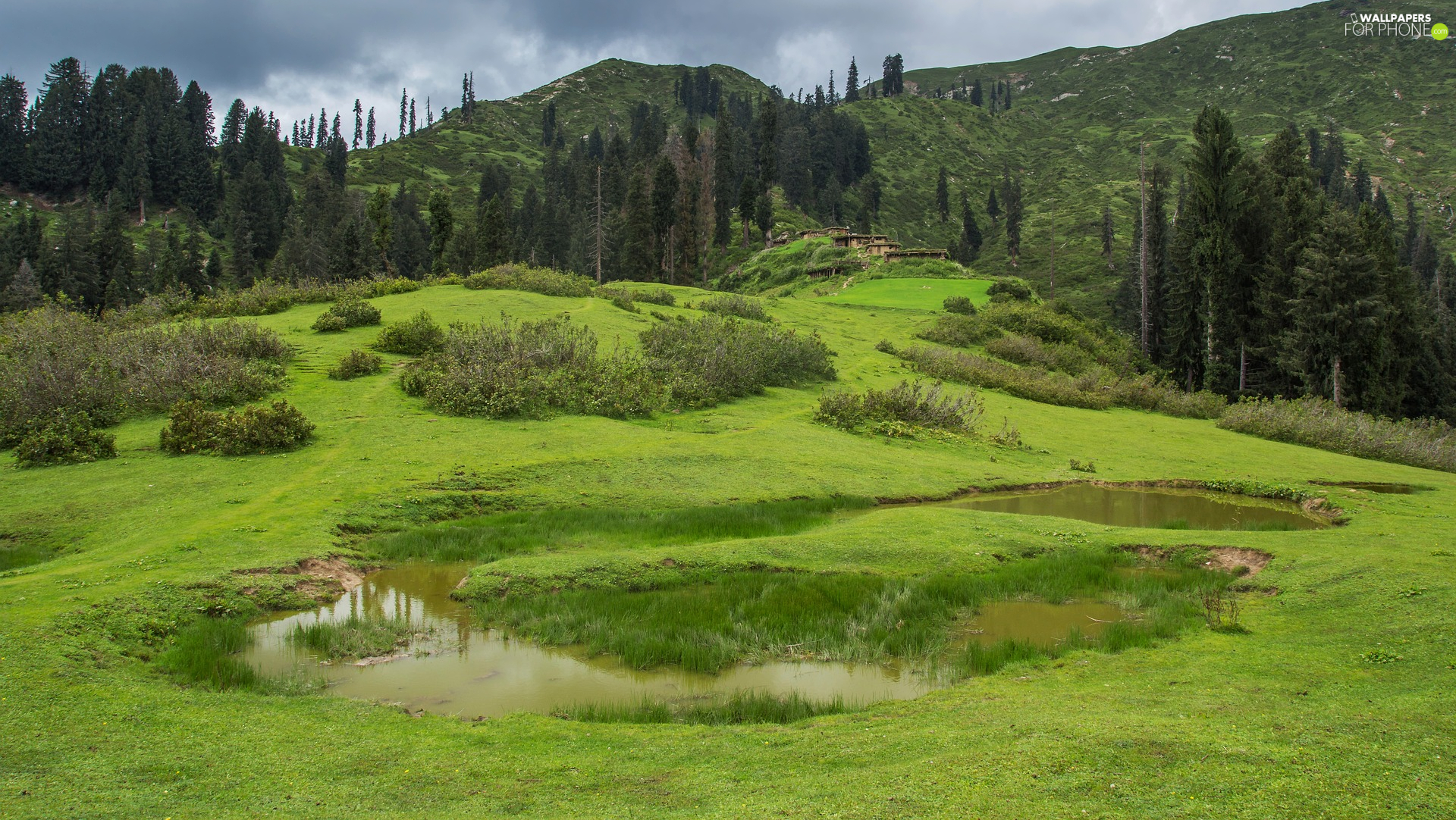 trees, Pond - car, green, car in the meadow, The Hills, viewes, VEGETATION