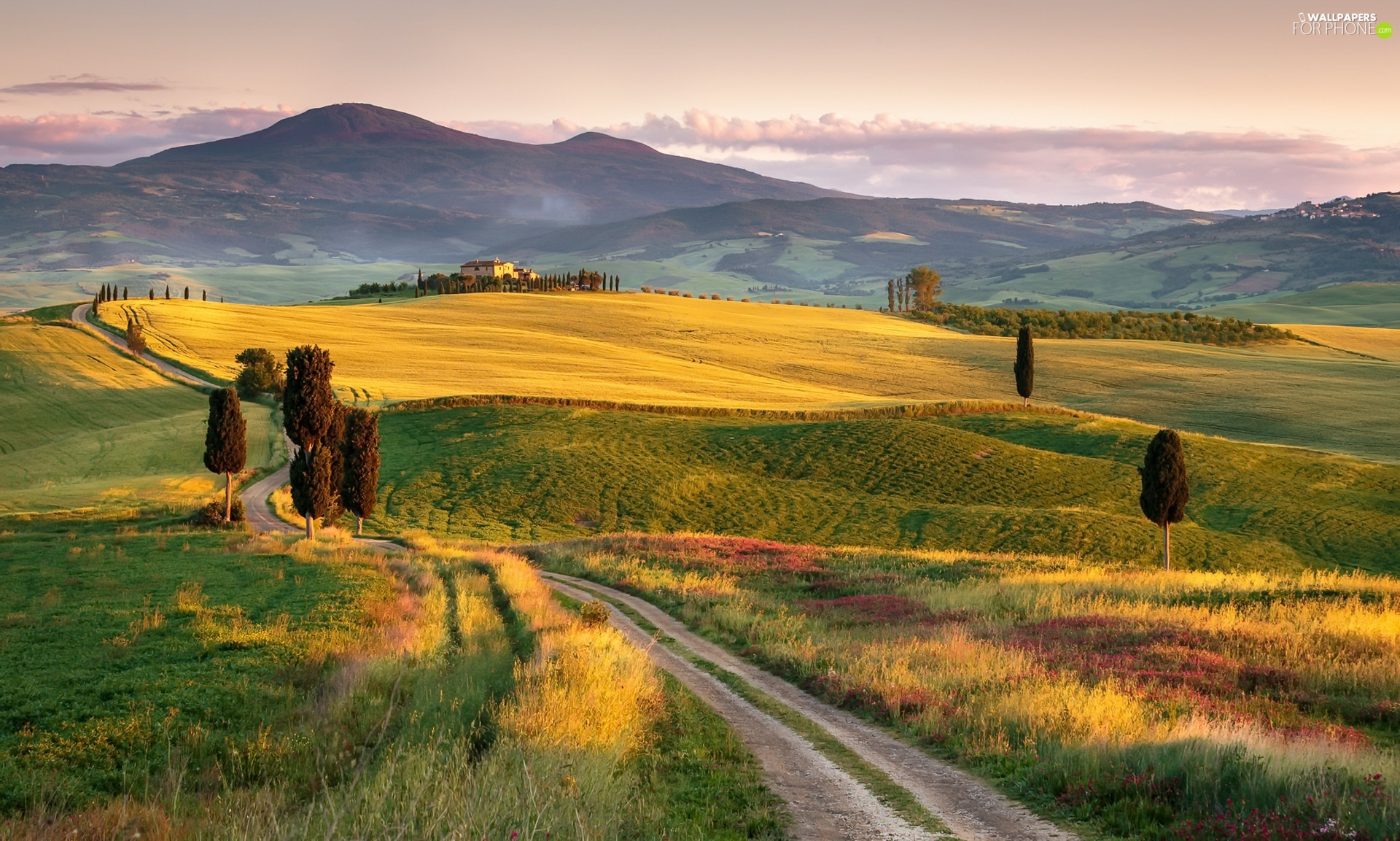 The Hills, field, viewes, Way, trees, Tuscany, Italy, Houses