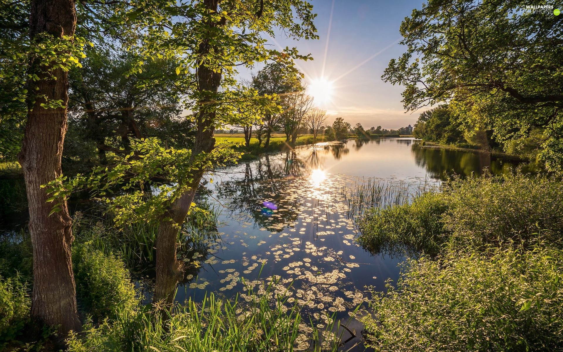 lake, Park, viewes, reflection, trees, rays of the Sun