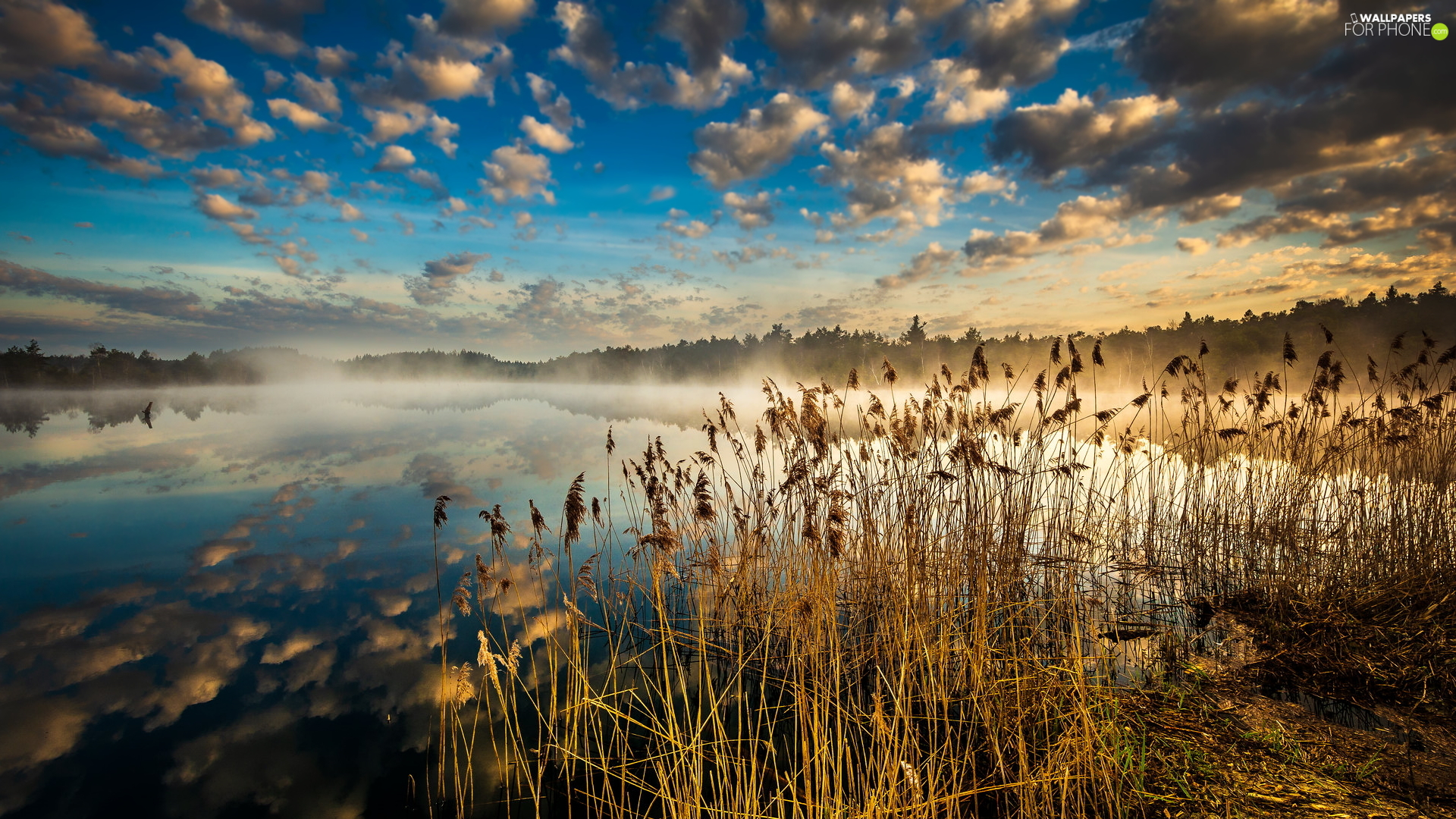 Fog, grass, reflection, lake, rushes, clouds, Sunrise