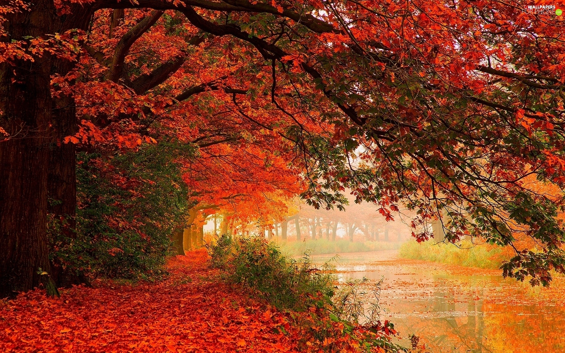 viewes, River, Leaf, autumn, color, trees