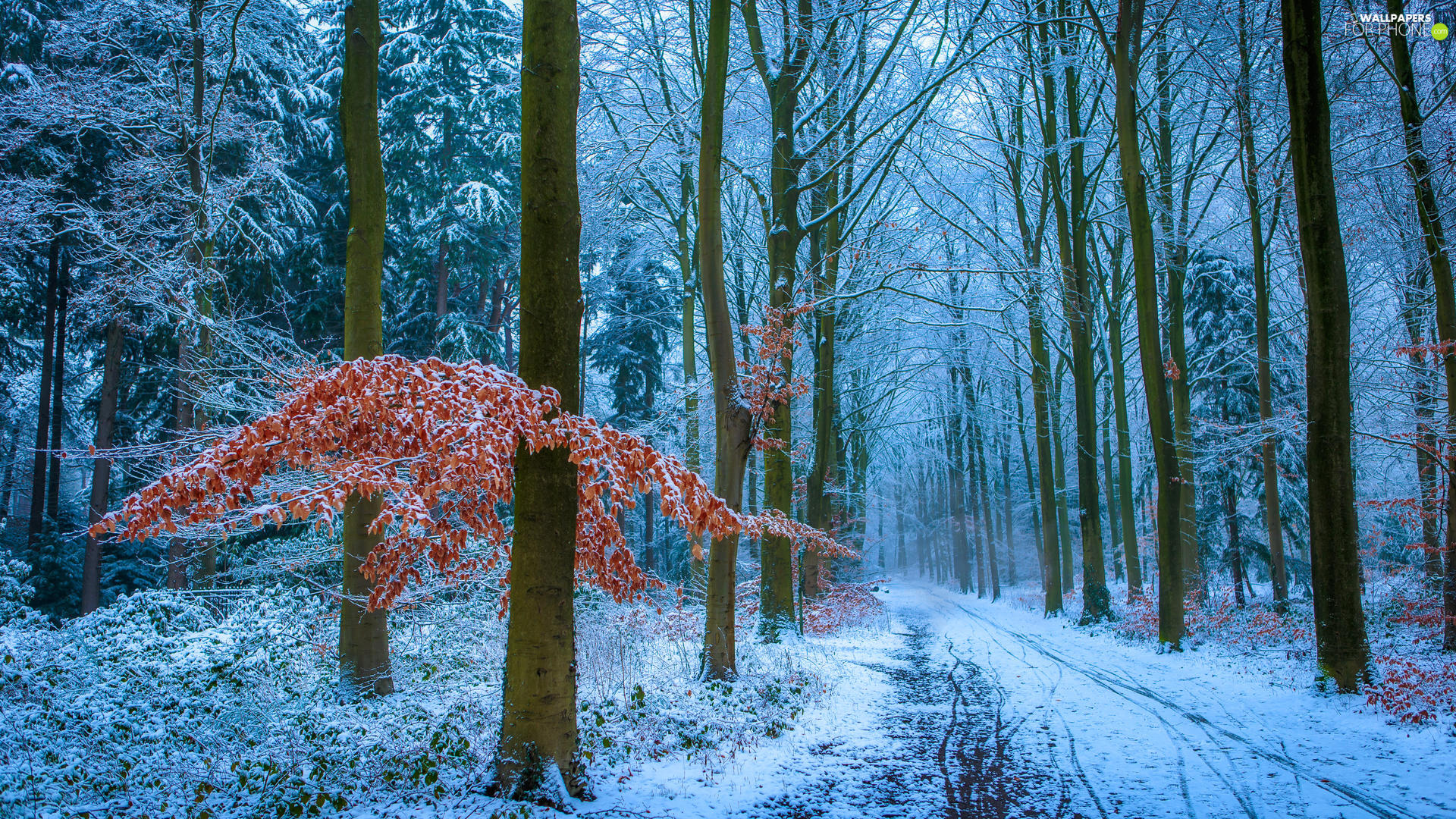 Way, winter, viewes, Leaf, trees, forest