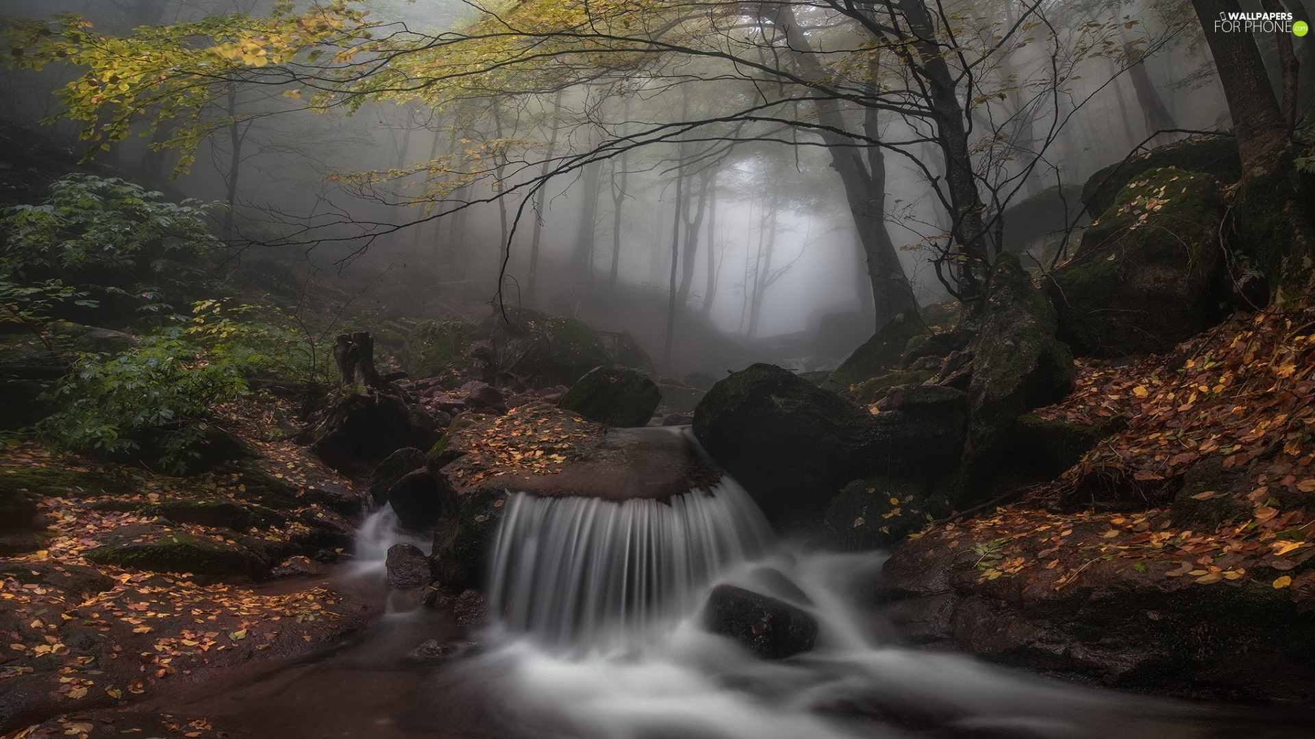 Fog, trees, River, viewes, Stones, forest, autumn, Leaf