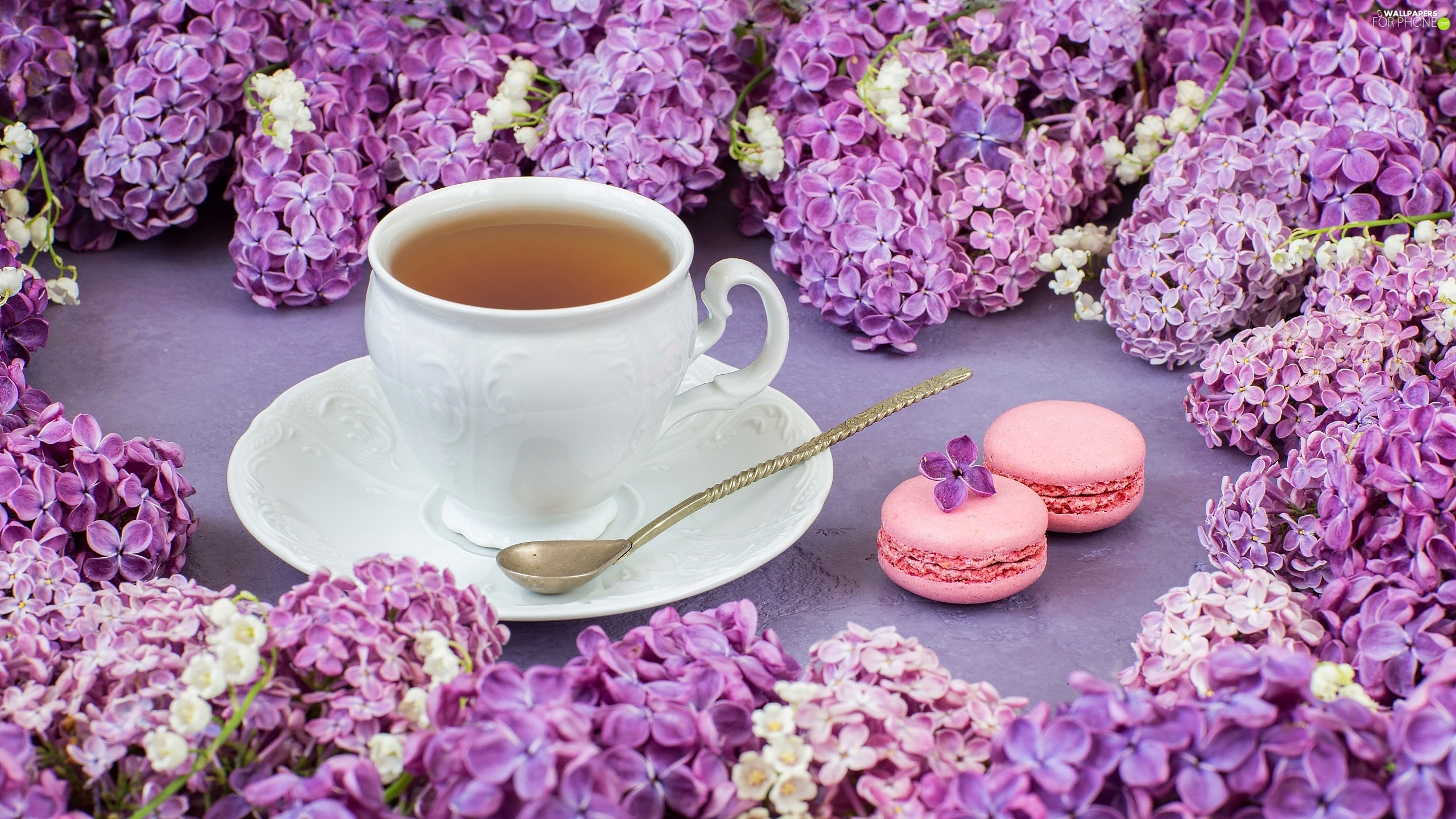 saucer, teaspoon, Twigs, Cookies, without, tea, cup, Macaroons