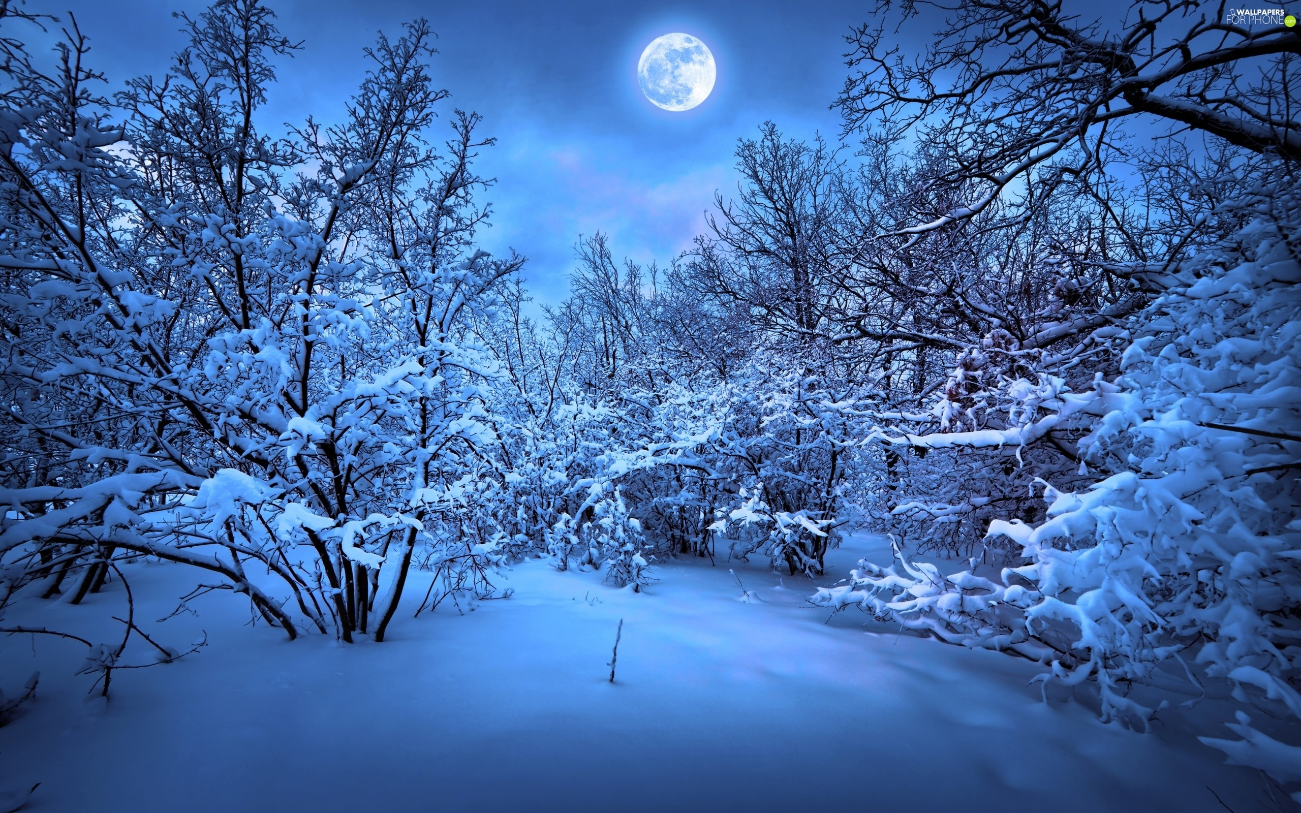 winter, viewes, moon, trees
