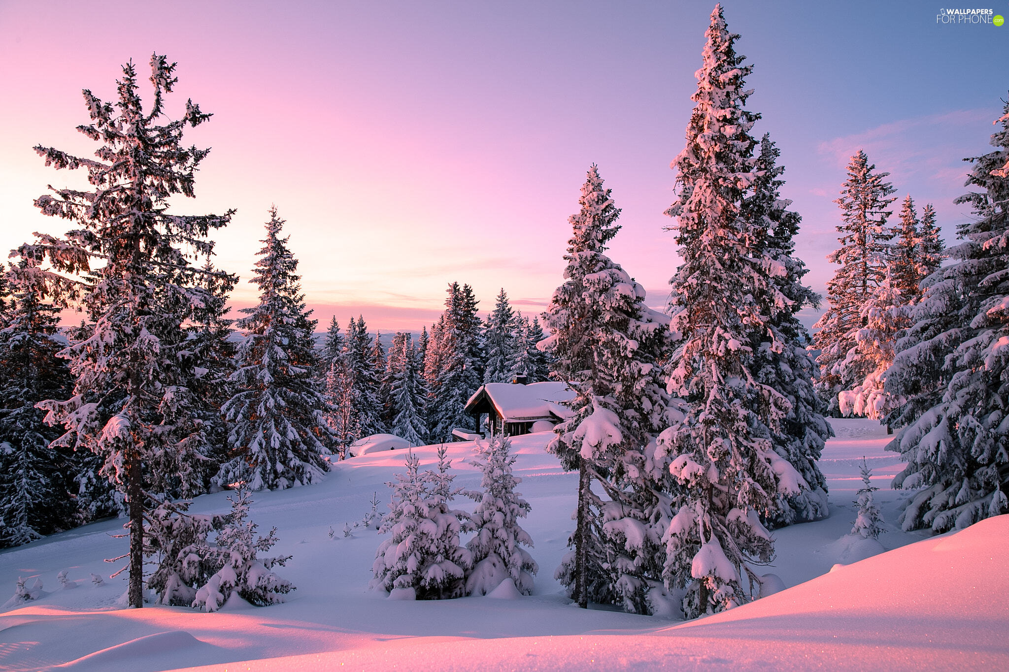 trees, viewes, winter, forest, Sunrise, Snowy, house, Mountains