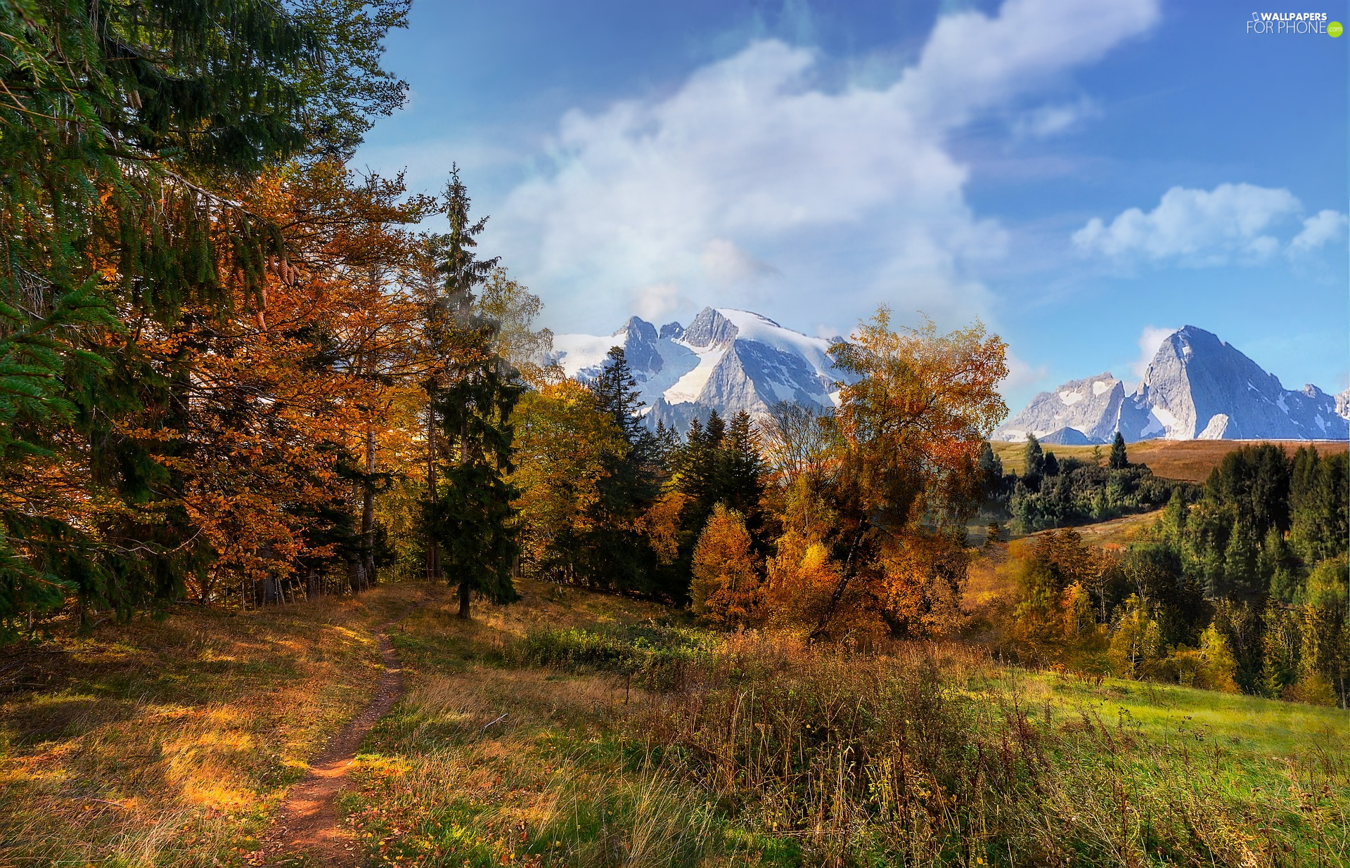 trees, Snowy, forest, peaks, Mountains, viewes, autumn