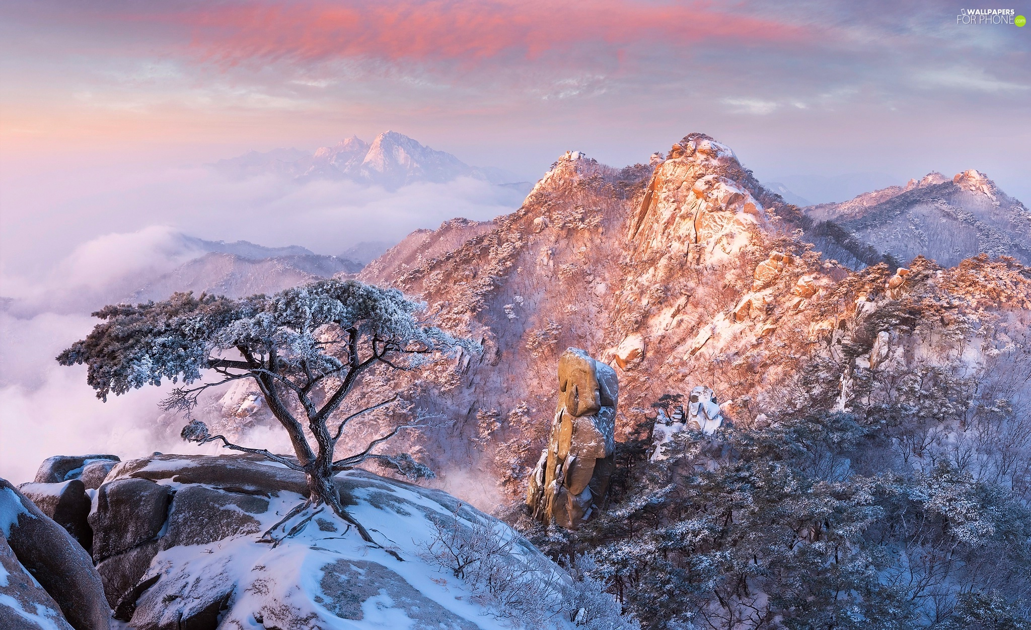 Mountains, South Korea, Snowy, winter, Stones, pine, viewes, Bukhansan National Park, Gyeonggi-do Province, trees, rocks