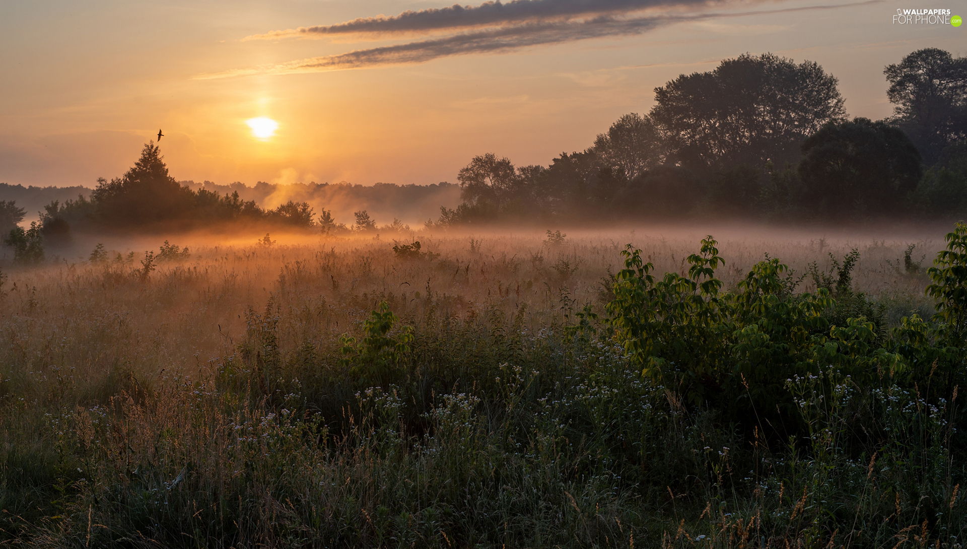 trees, grass, Sunrise, Plants, Meadow, viewes, Fog