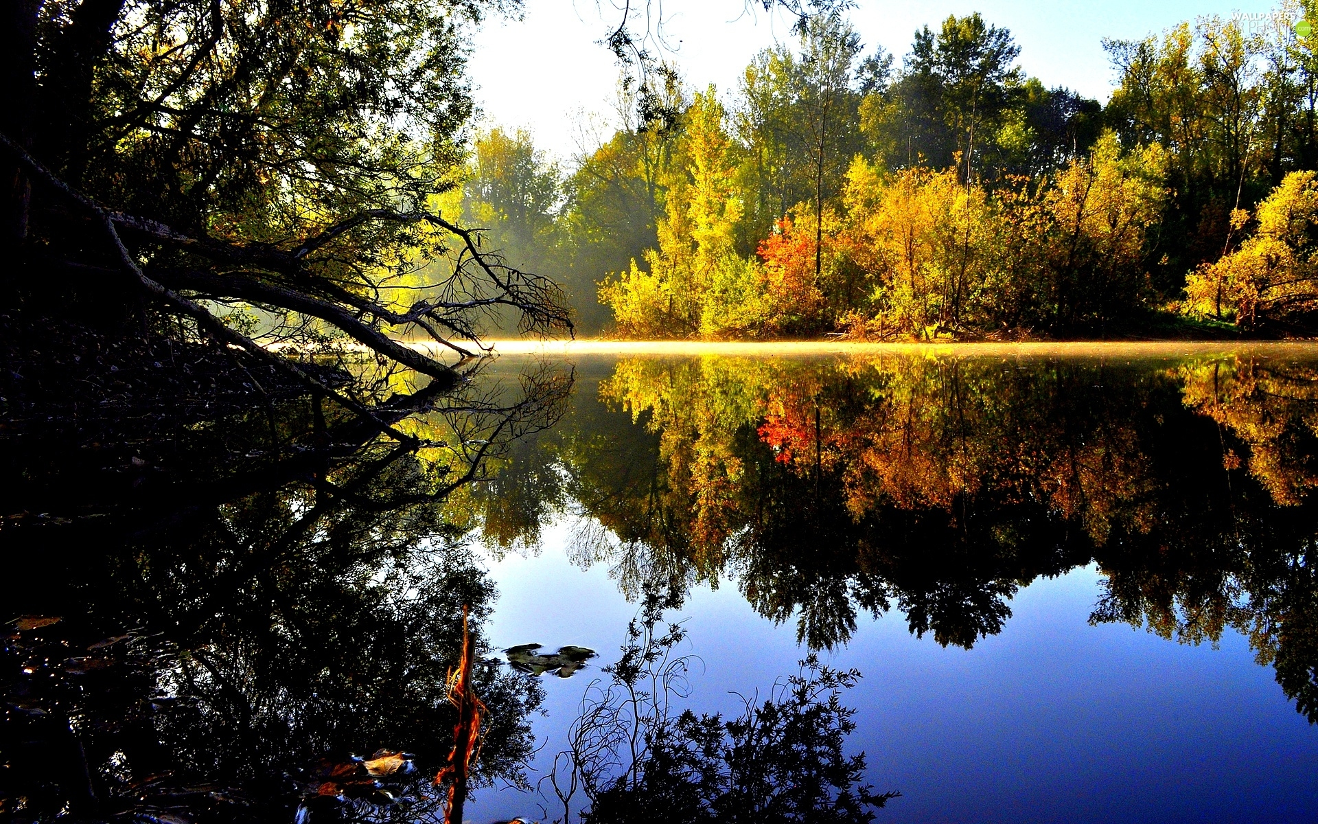 autumn, forest, reflection, lake