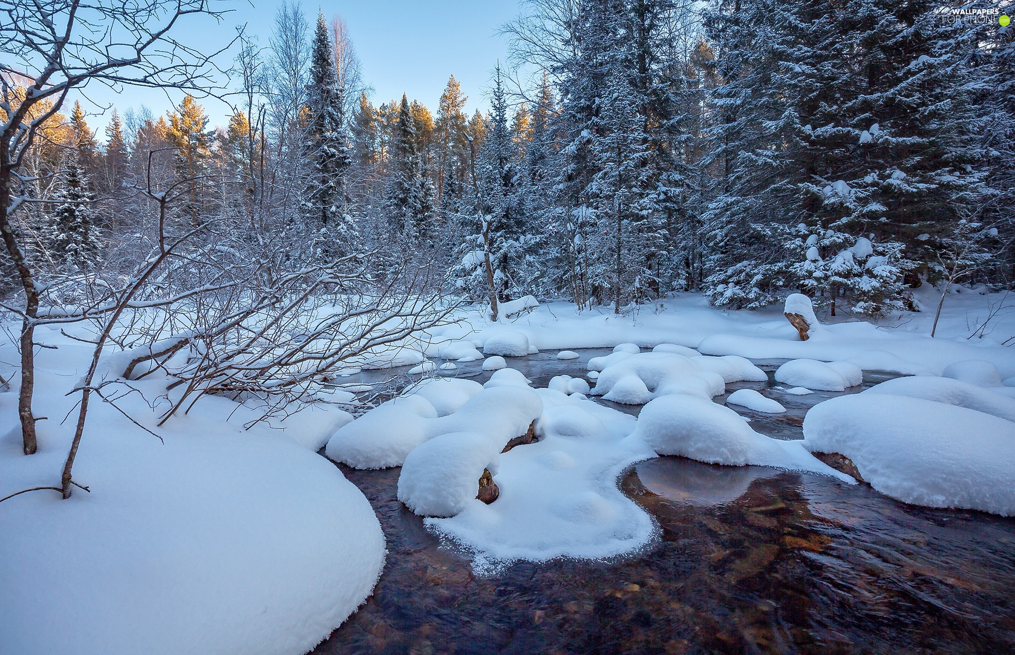 forest, winter, viewes, River, trees, snowy