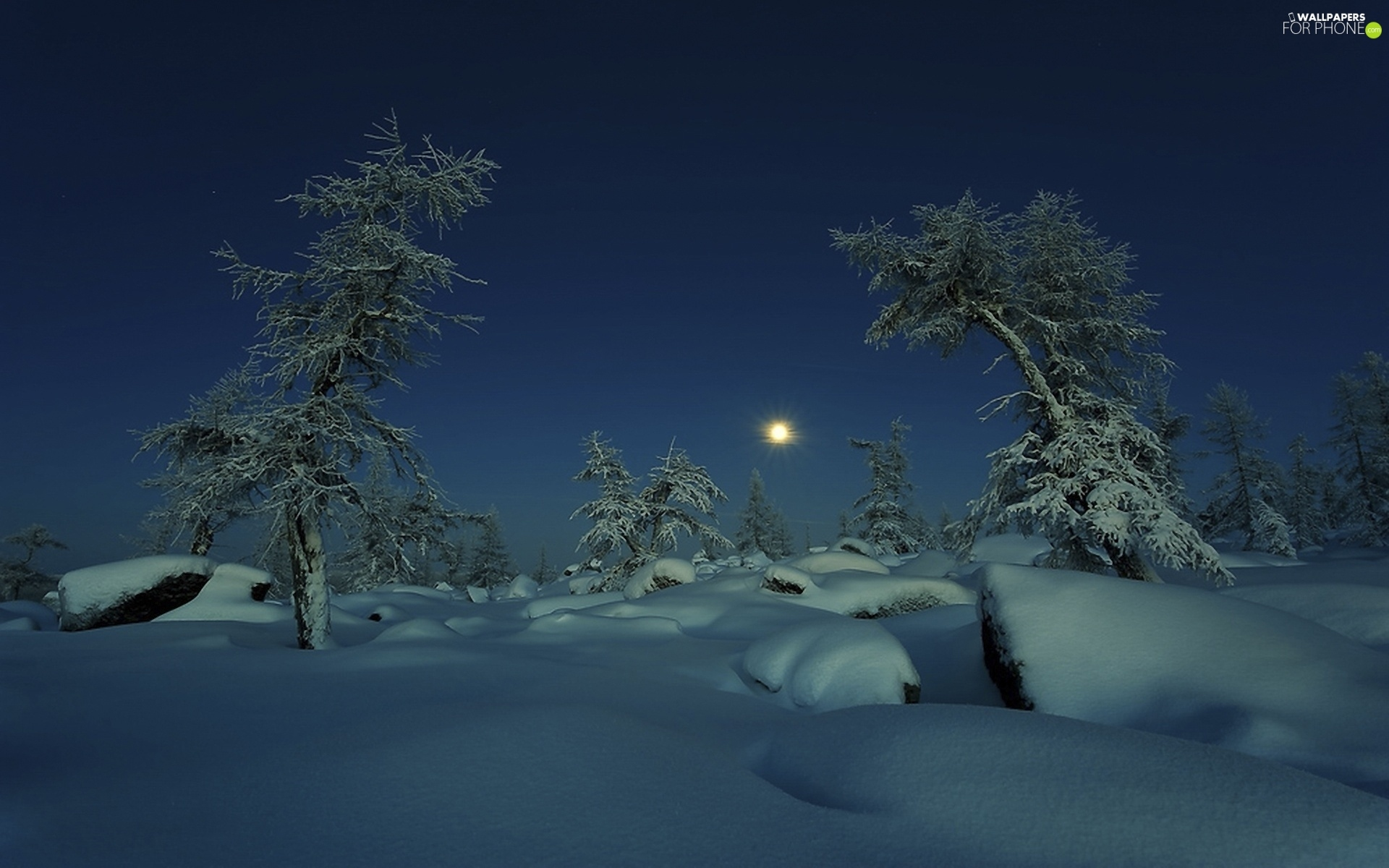 moon, viewes, snow, trees