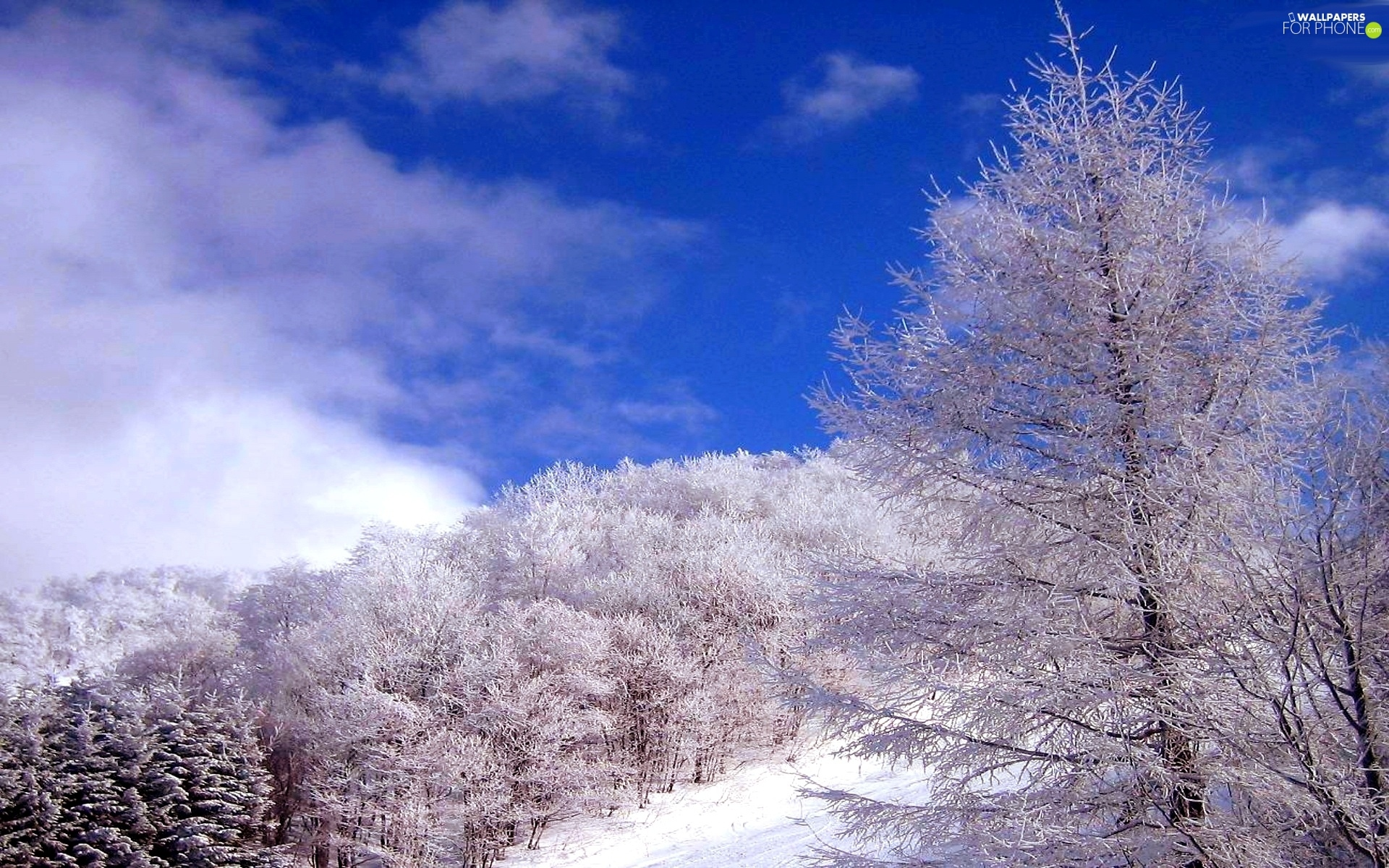snow, winter, trees, viewes, Sky