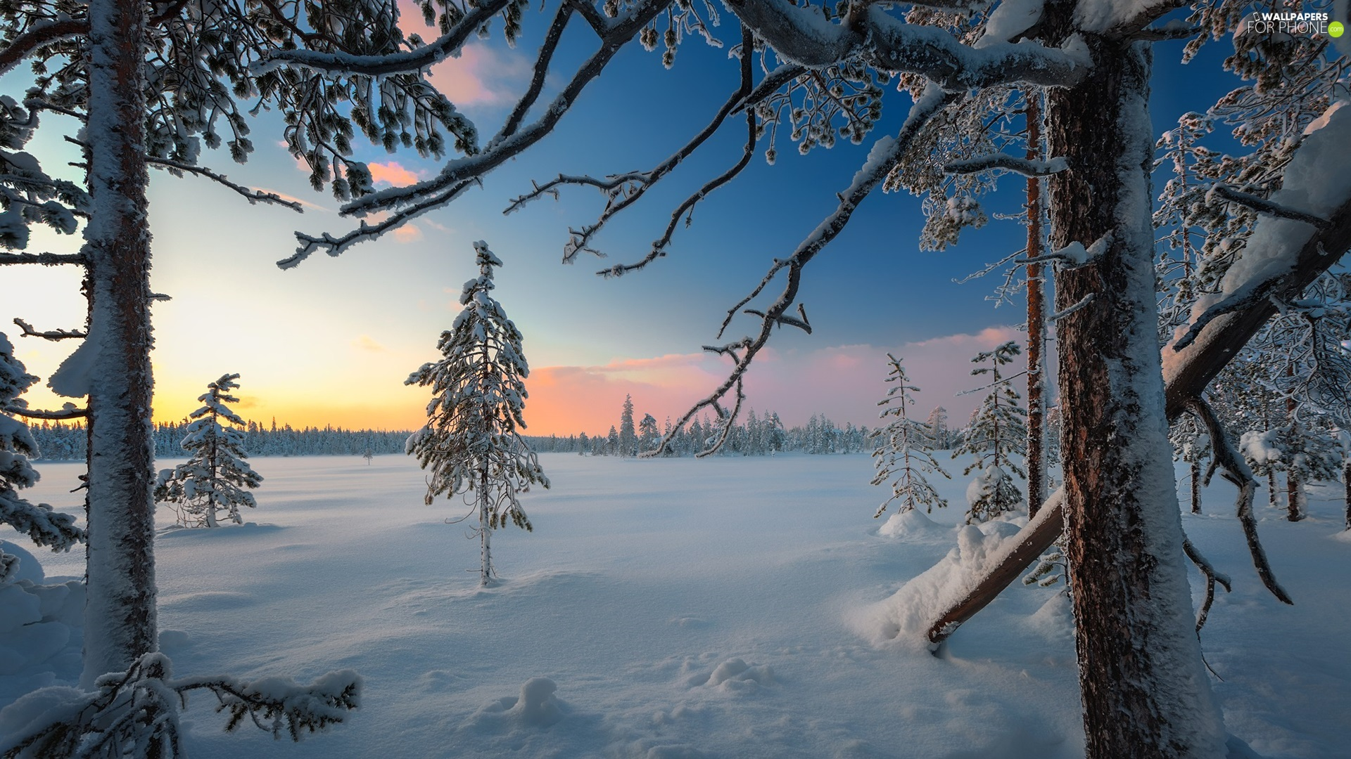 Snowy, winter, viewes, car in the meadow, trees, forest