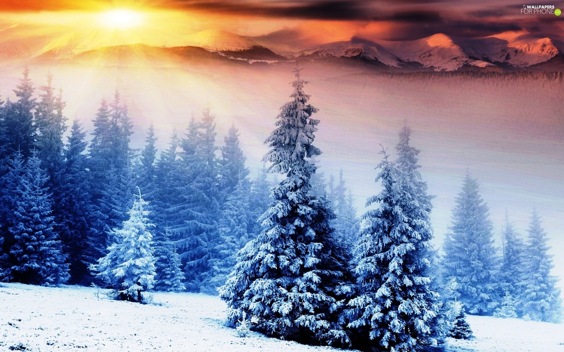Spruces, winter, rays, sun, Mountains