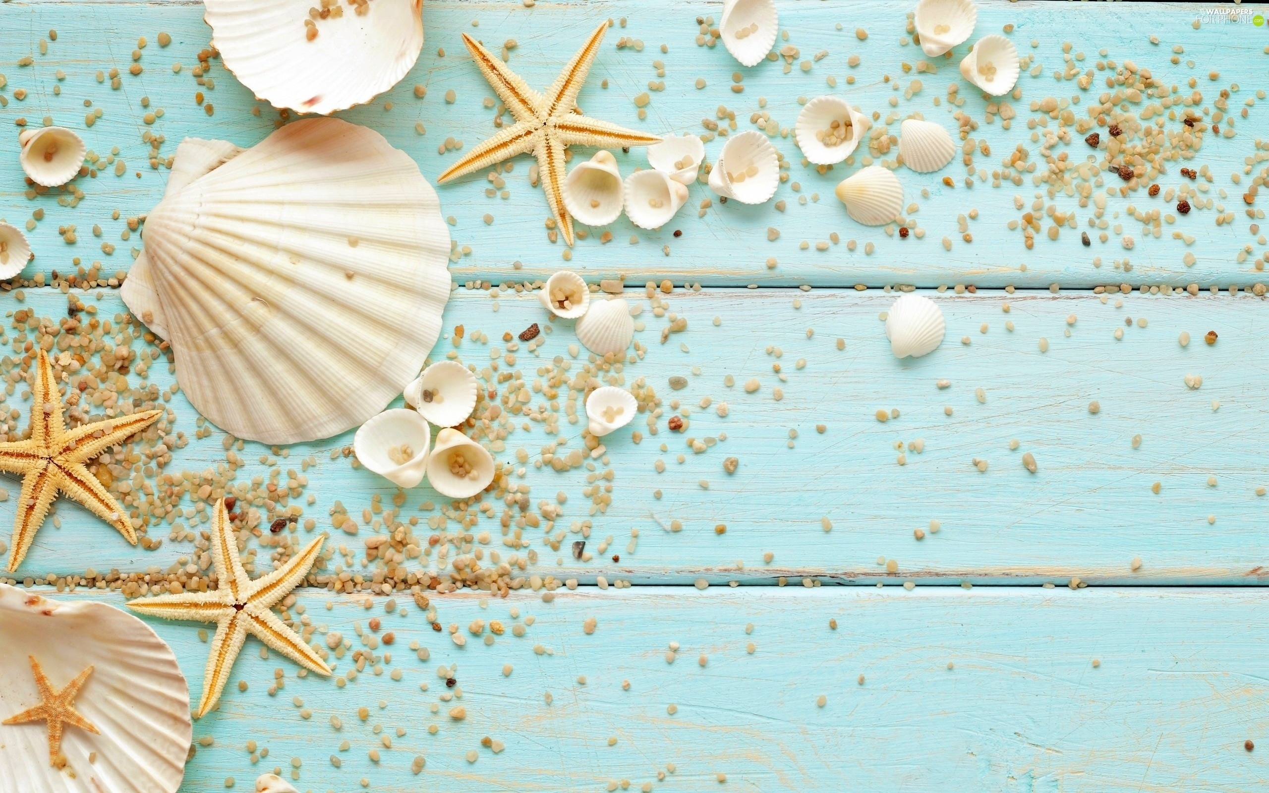 decoration  shells  starfish  pebbles