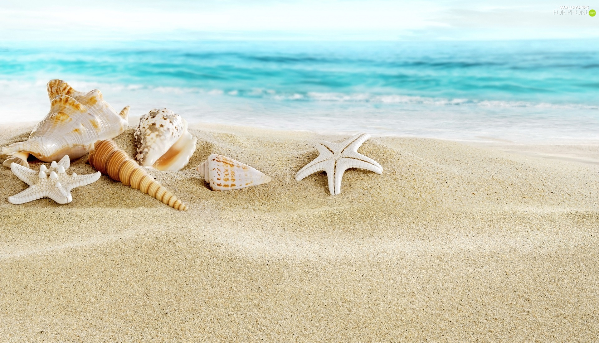 Shells, Sand, sea, starfish