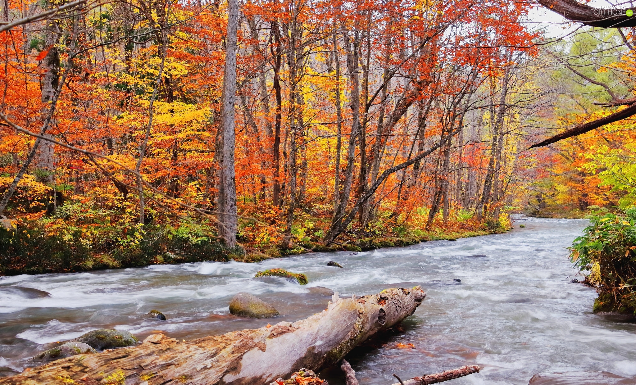 trees, River, VEGETATION, Stones, forest, viewes, autumn
