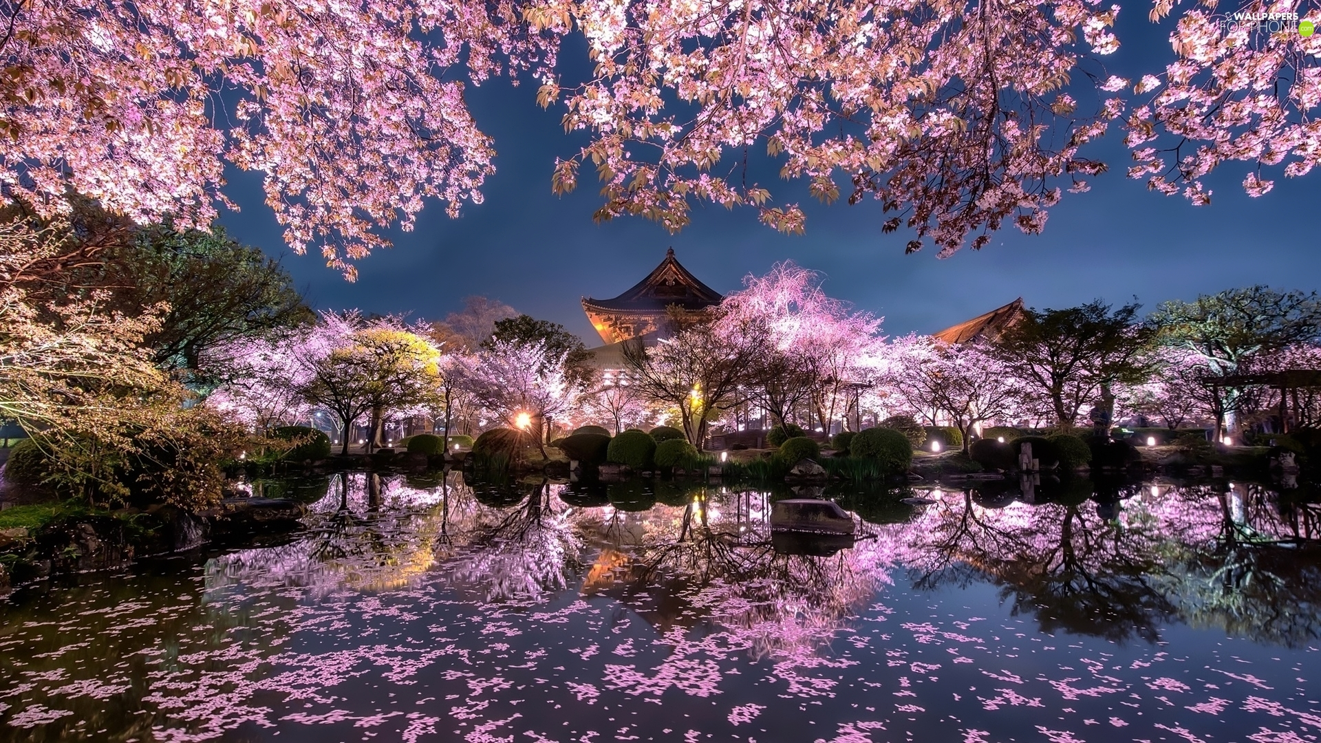 Pond - car, Japanese Garden, flourishing, trees, structures, evening, cherries, Spring, viewes