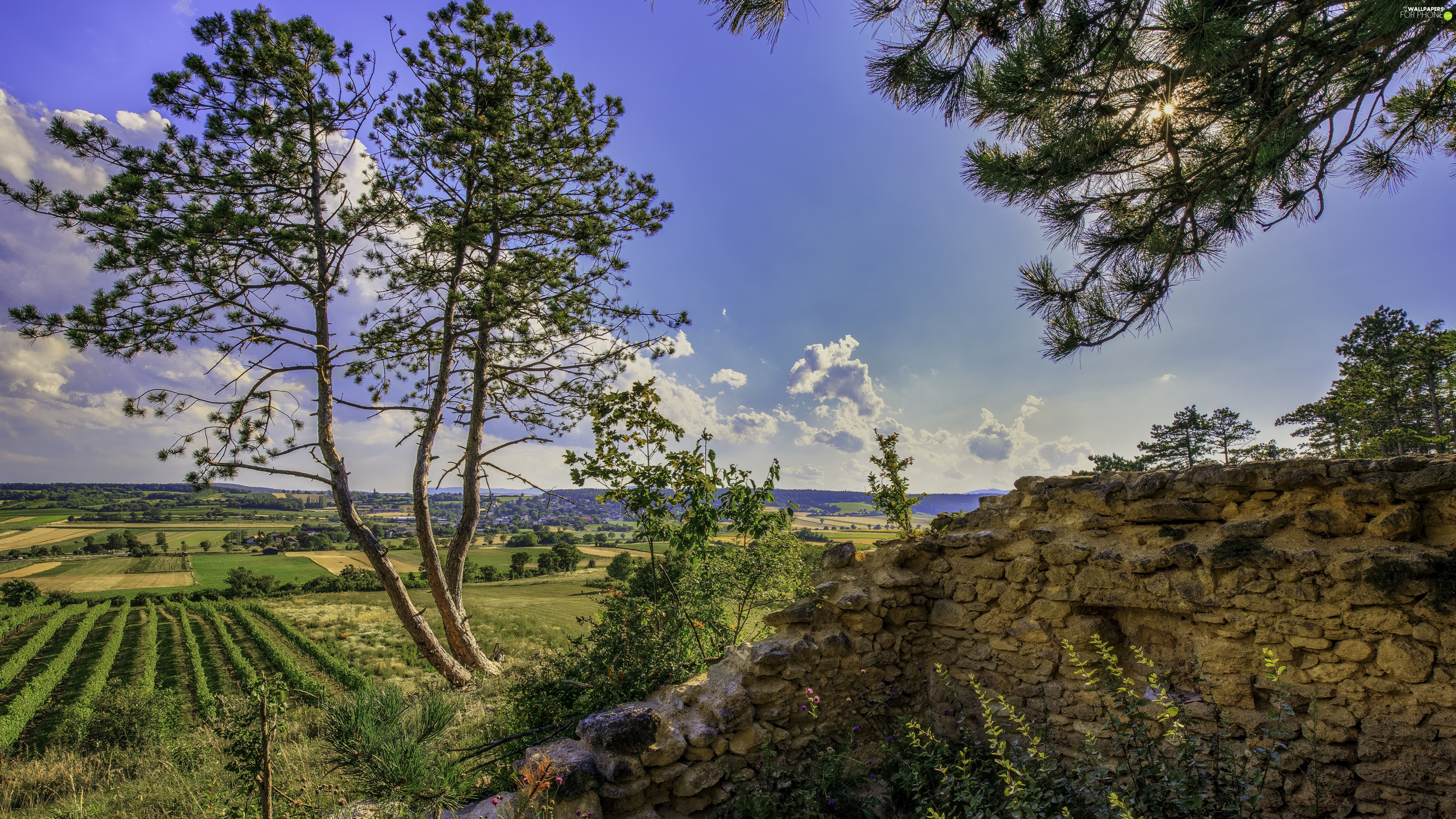stone, trees, field, summer, ledge, viewes