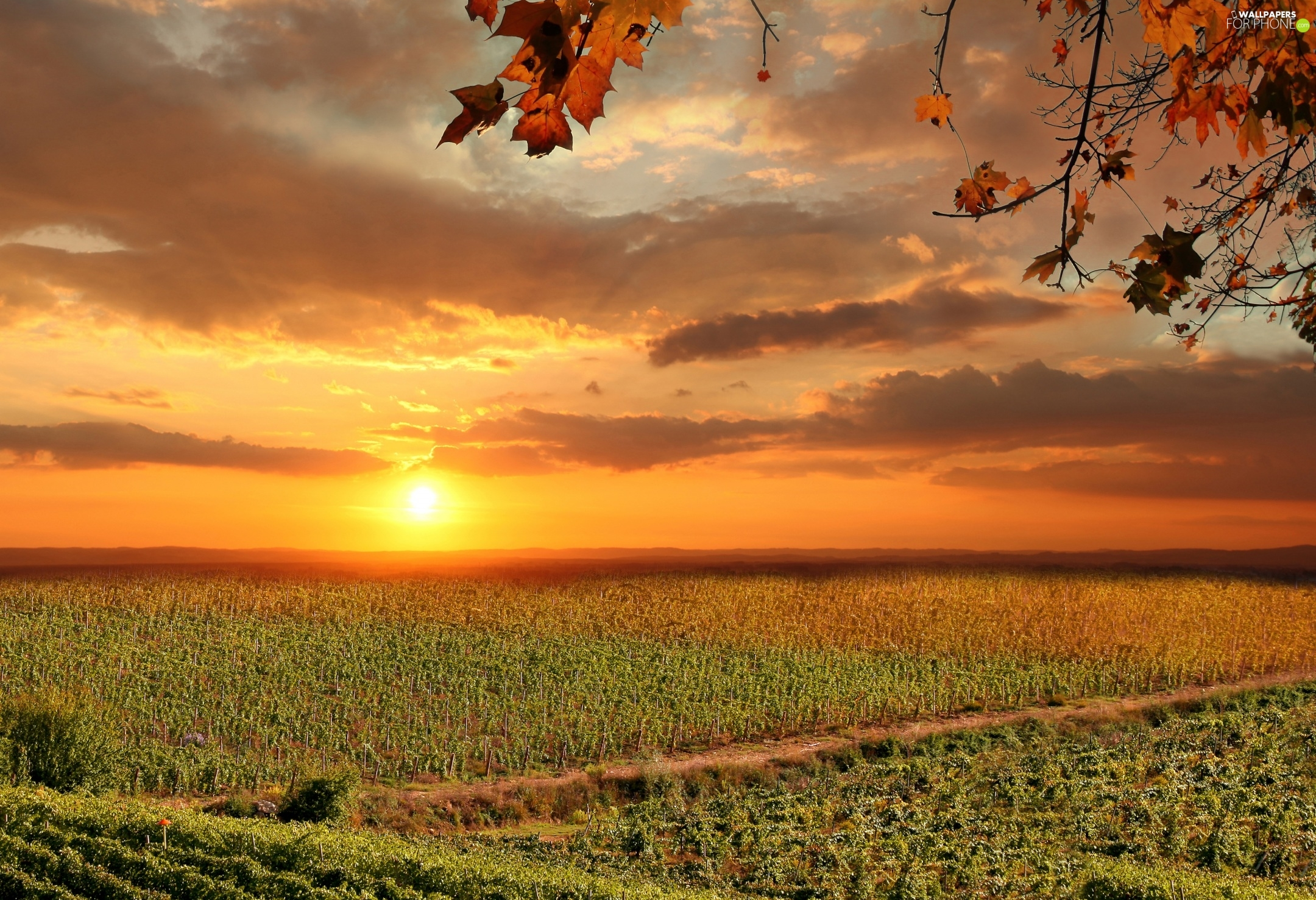 Field, Italy, Sunrise, clouds, vineyards, Tuscany