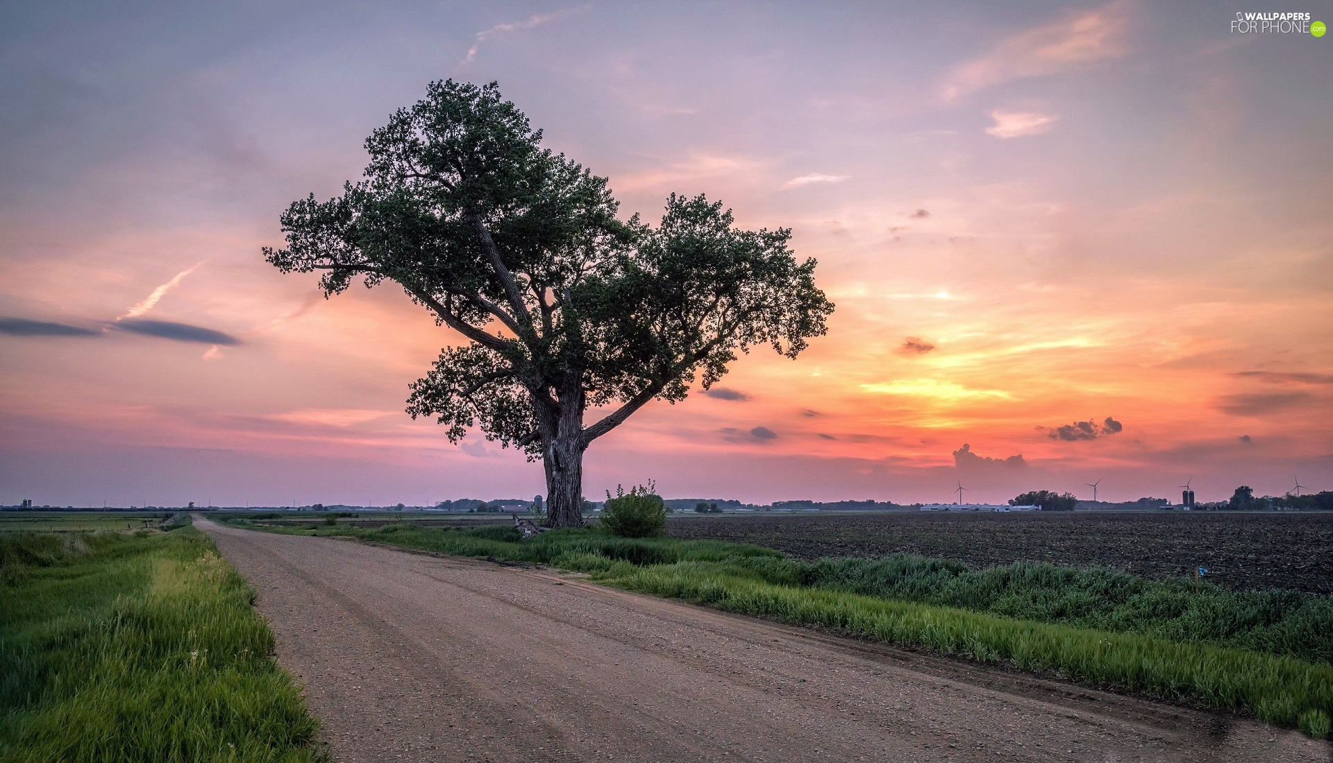 Great Sunsets, trees, field, Way