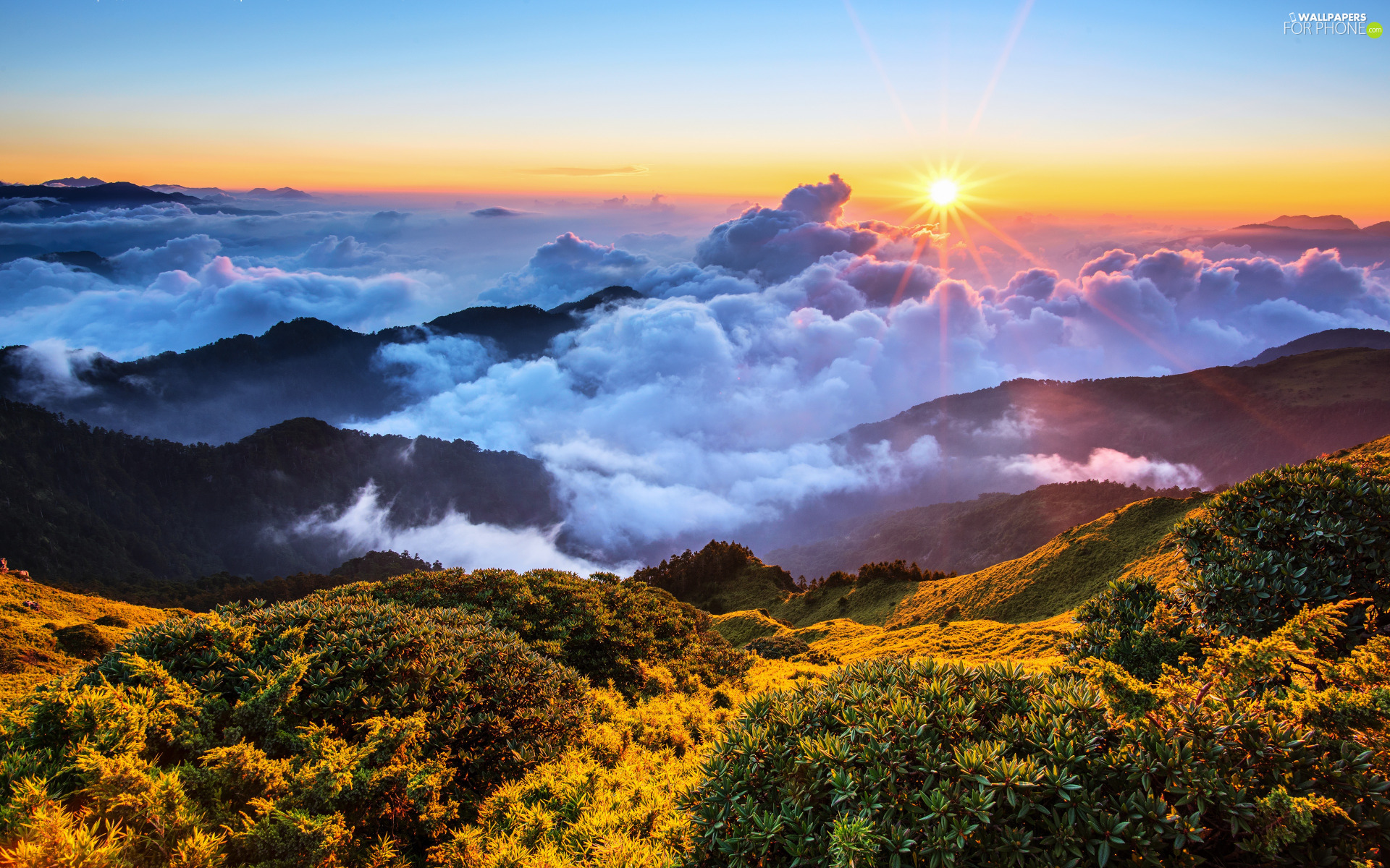 rays, clouds, VEGETATION, Mountains, The Hills, Sunrise, rays of the Sun, Fog