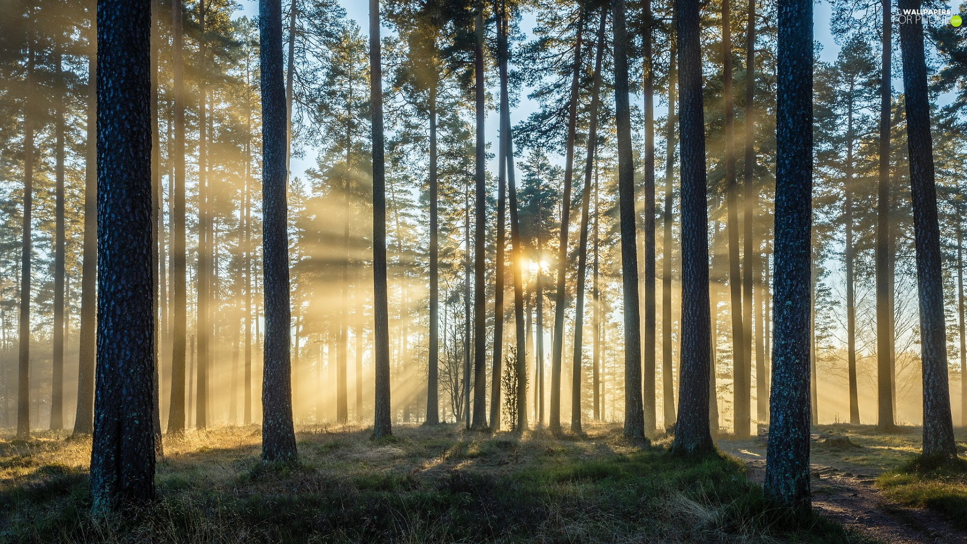 rays of the Sun, light breaking through sky, trees, viewes, forest