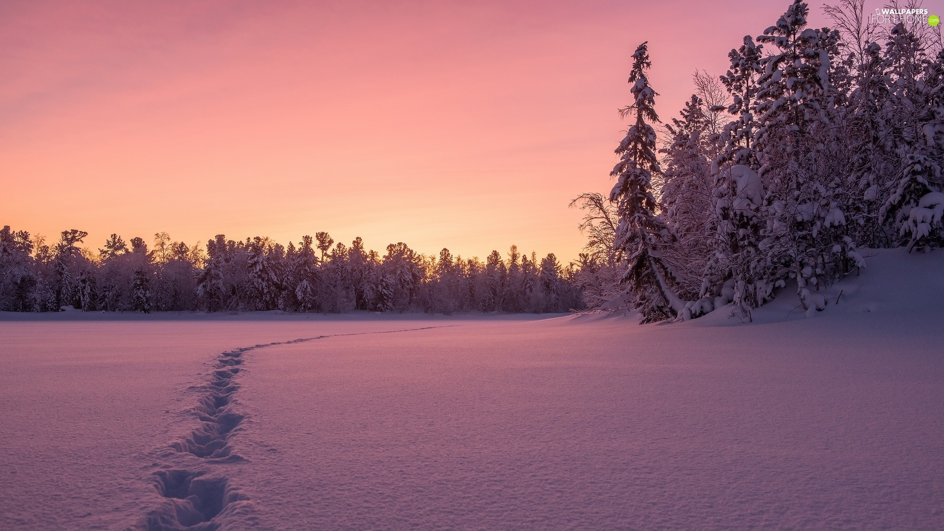 trees, snow, Great Sunsets, forest, winter, viewes, traces