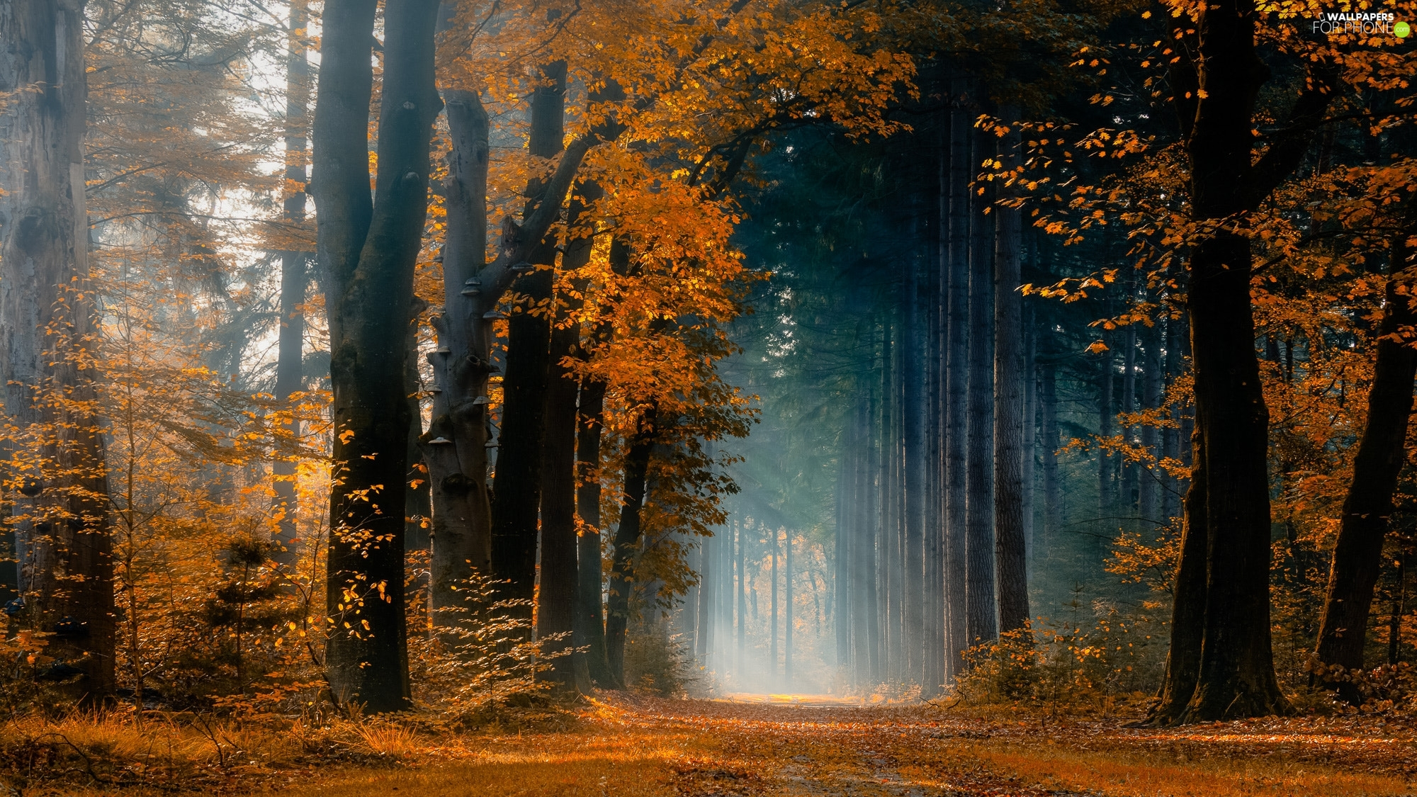 trees, forest, rays of the Sun, autumn, viewes, Way