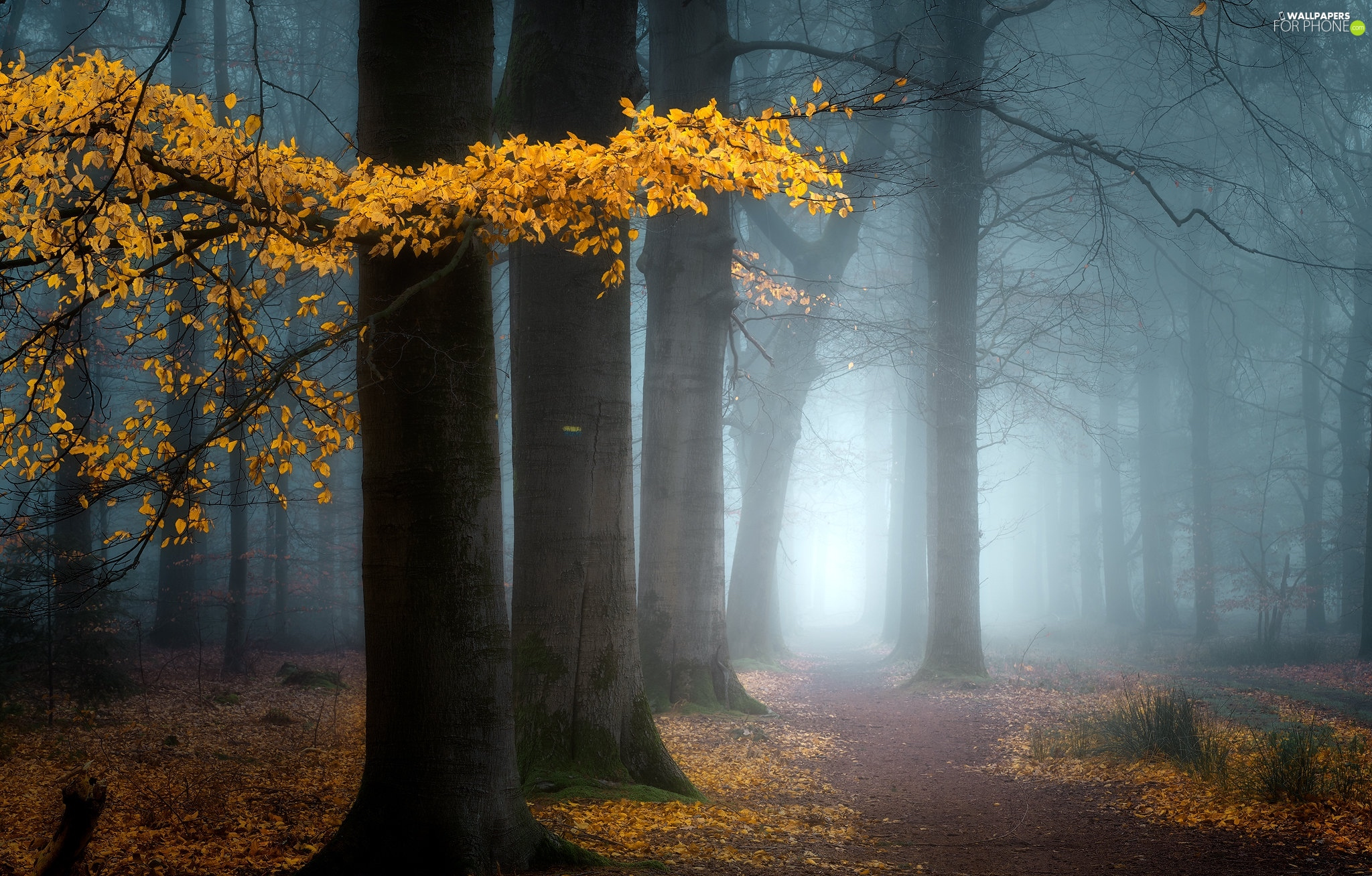 trees, forest, viewes, autumn, Leaf, Path, branch, Yellow, Fog