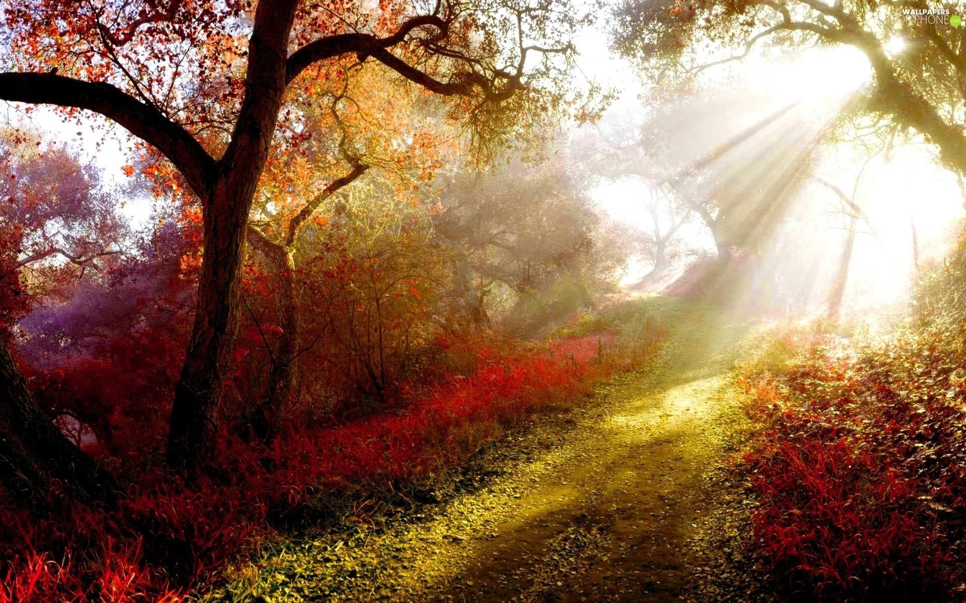 viewes, Path, color, trees, rays of the Sun