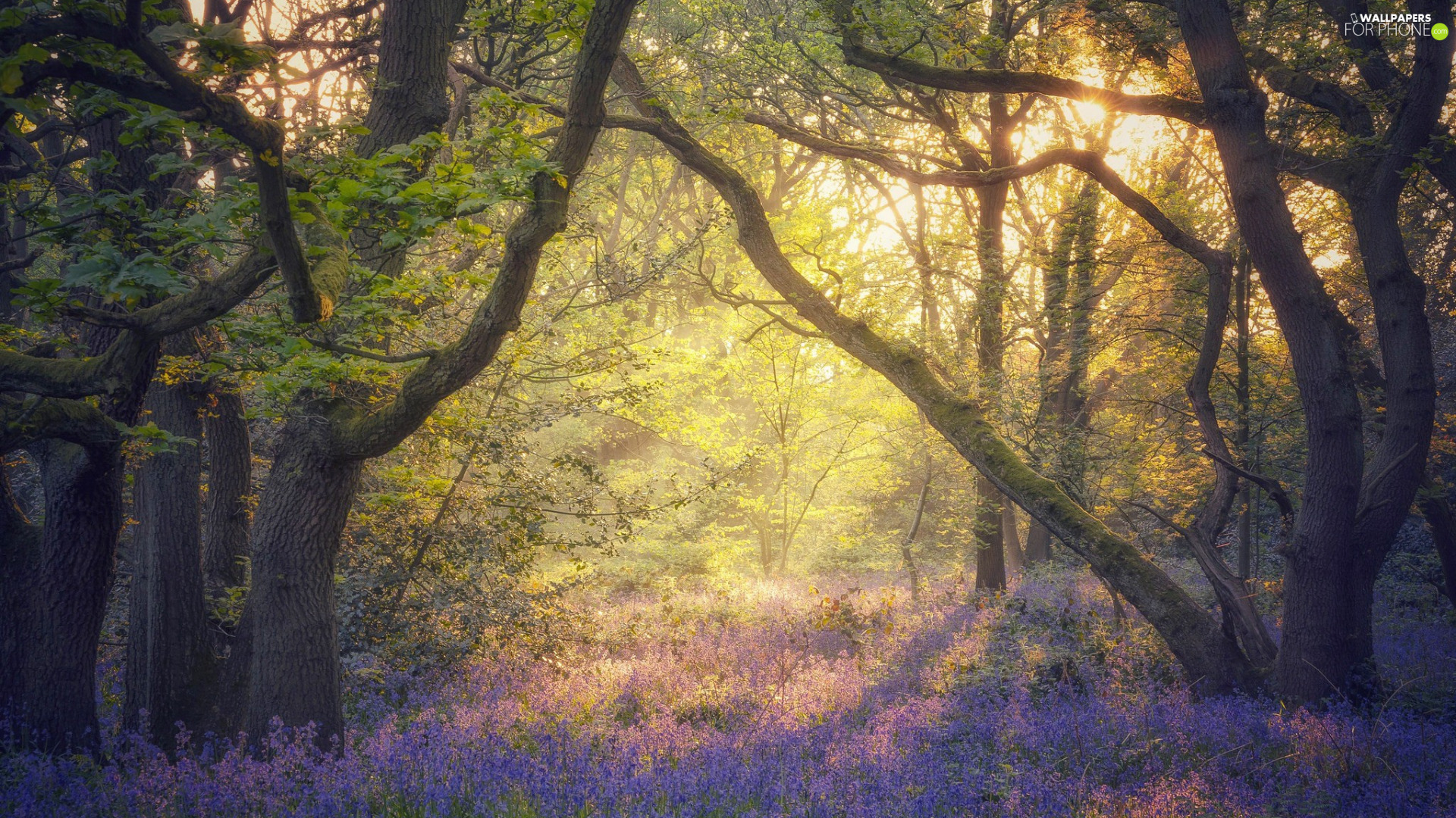 viewes, forest, morning, trees, Spring, Flowers, Fog