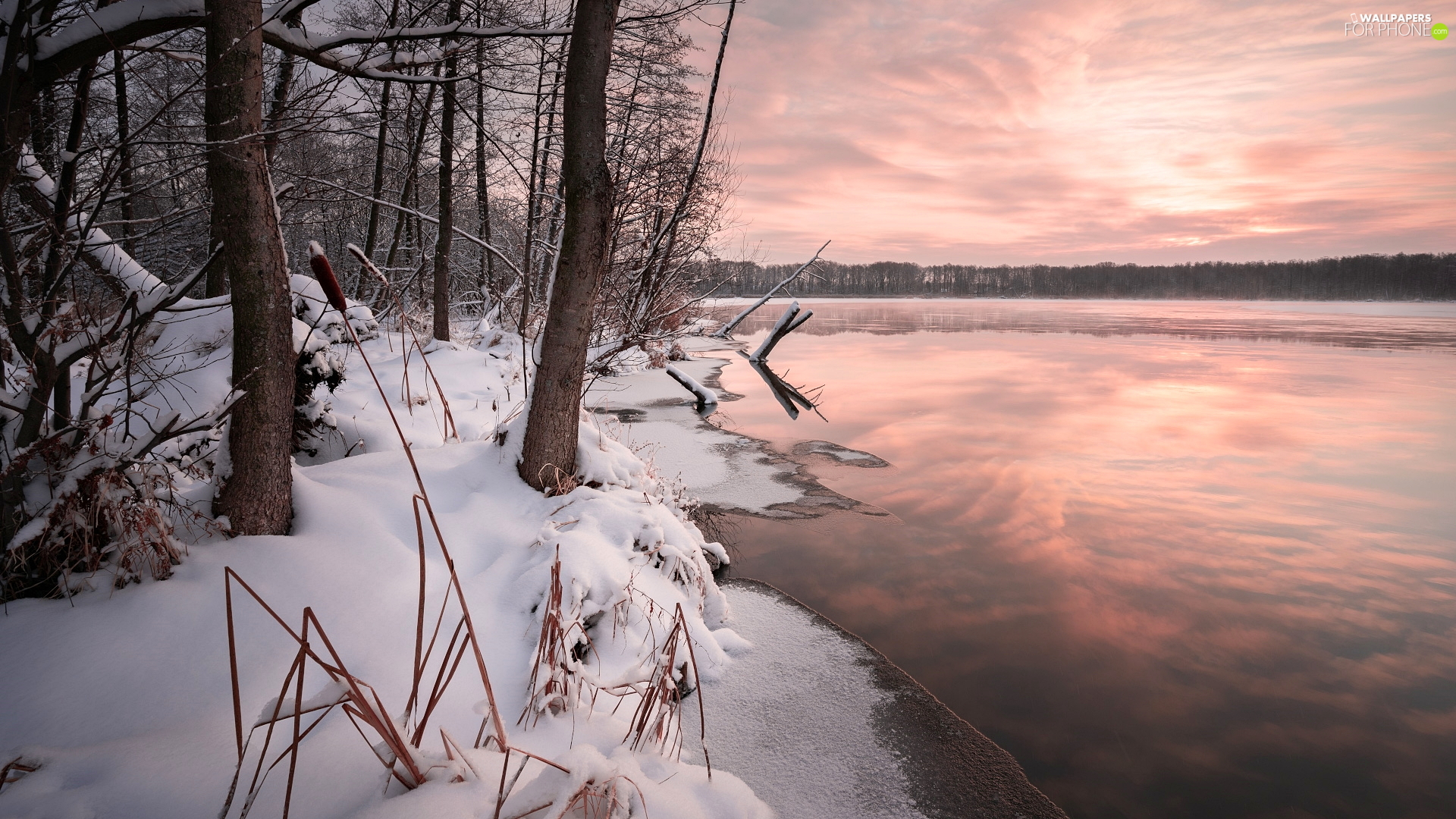 viewes, forest, snow, trees, winter, coast, lake