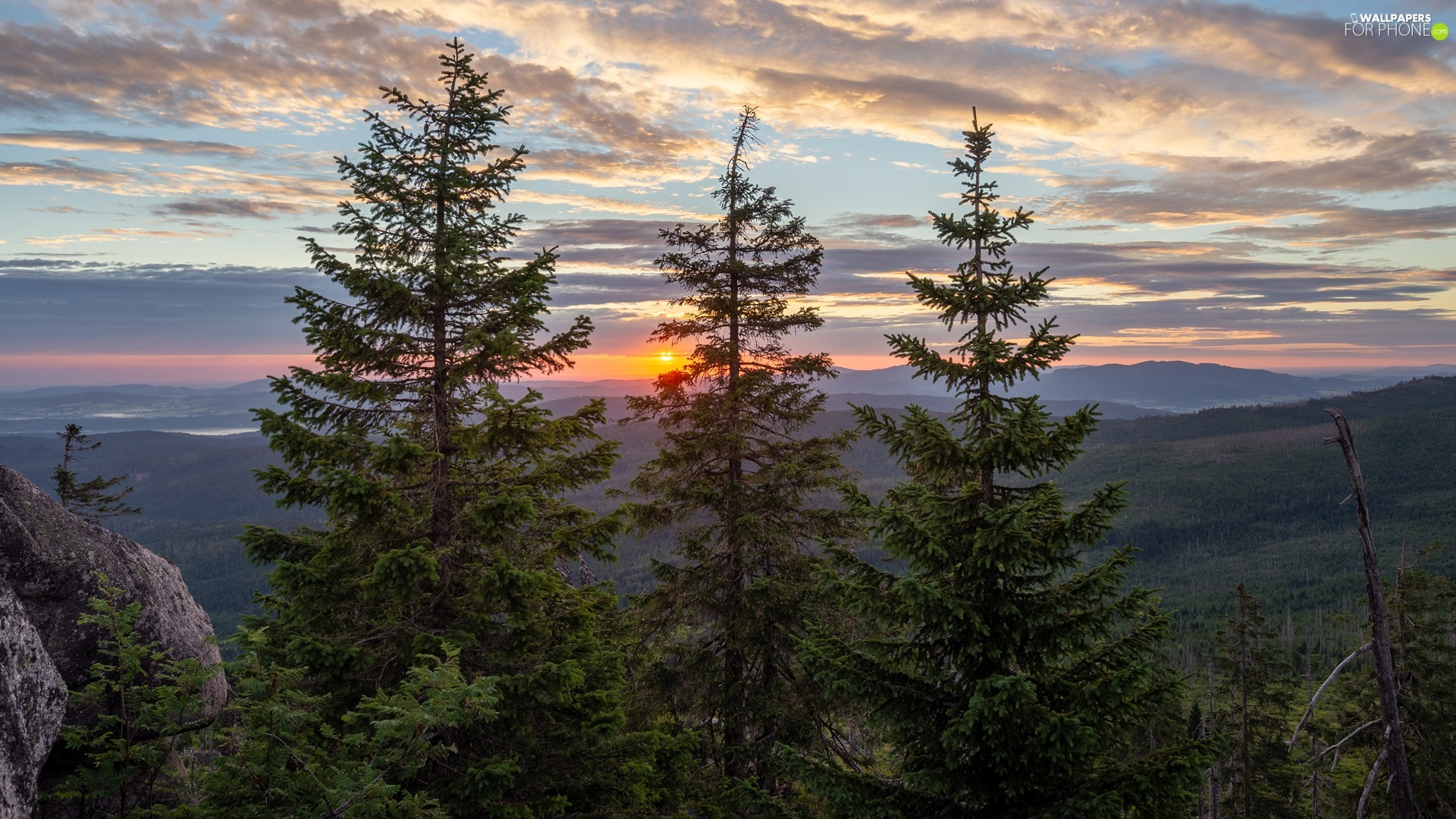 trees, viewes, clouds, Spruces, Great Sunsets, woods, Mountains, rocks
