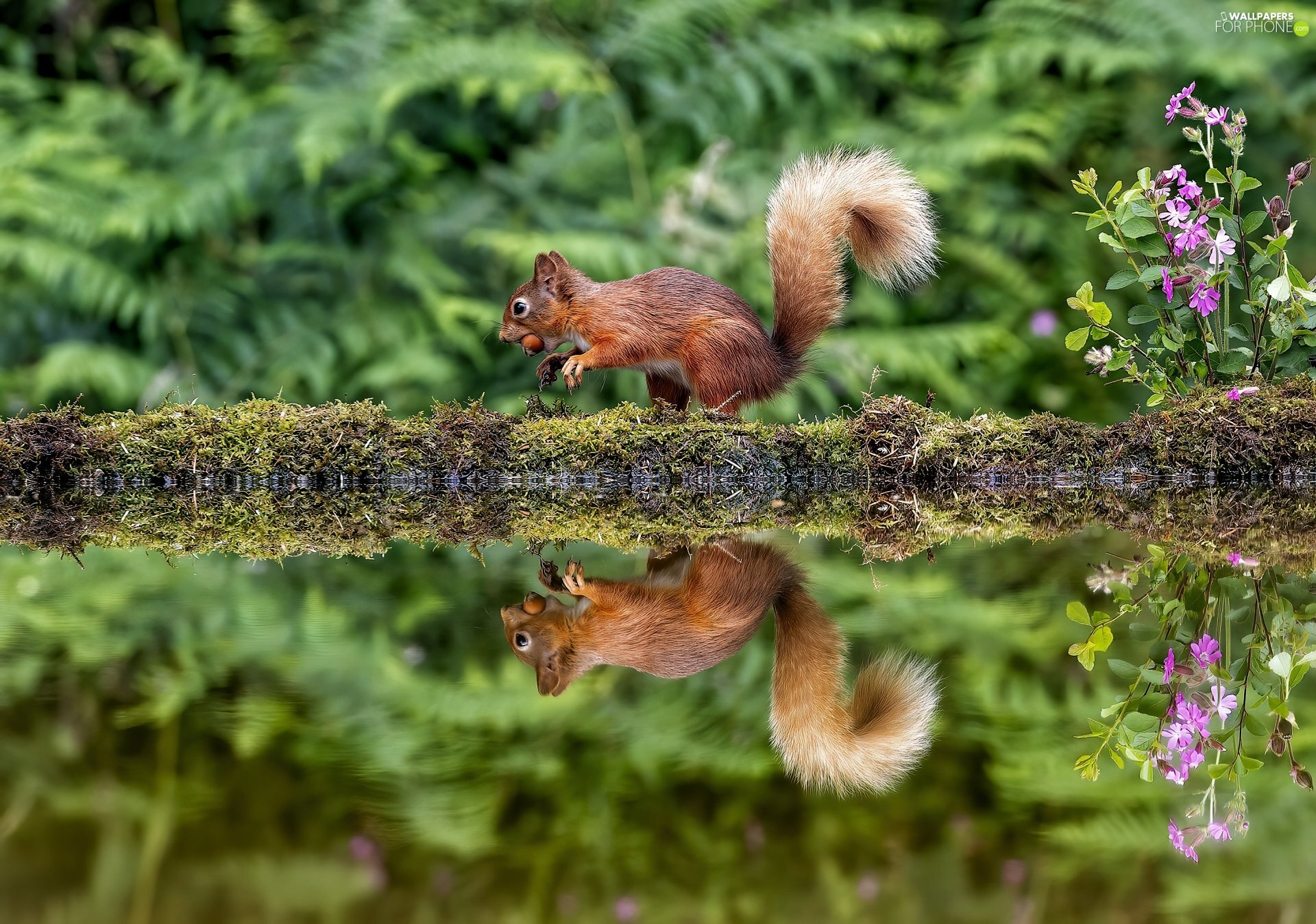 Moss, nut, water, trunk, squirrel, Flowers, reflection