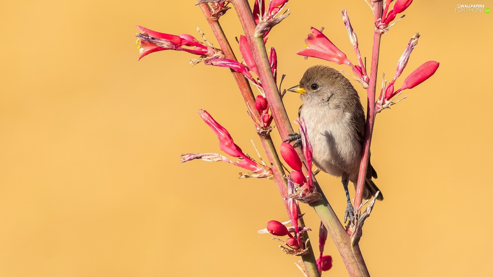 Bird, Red, Flowers, Twigs