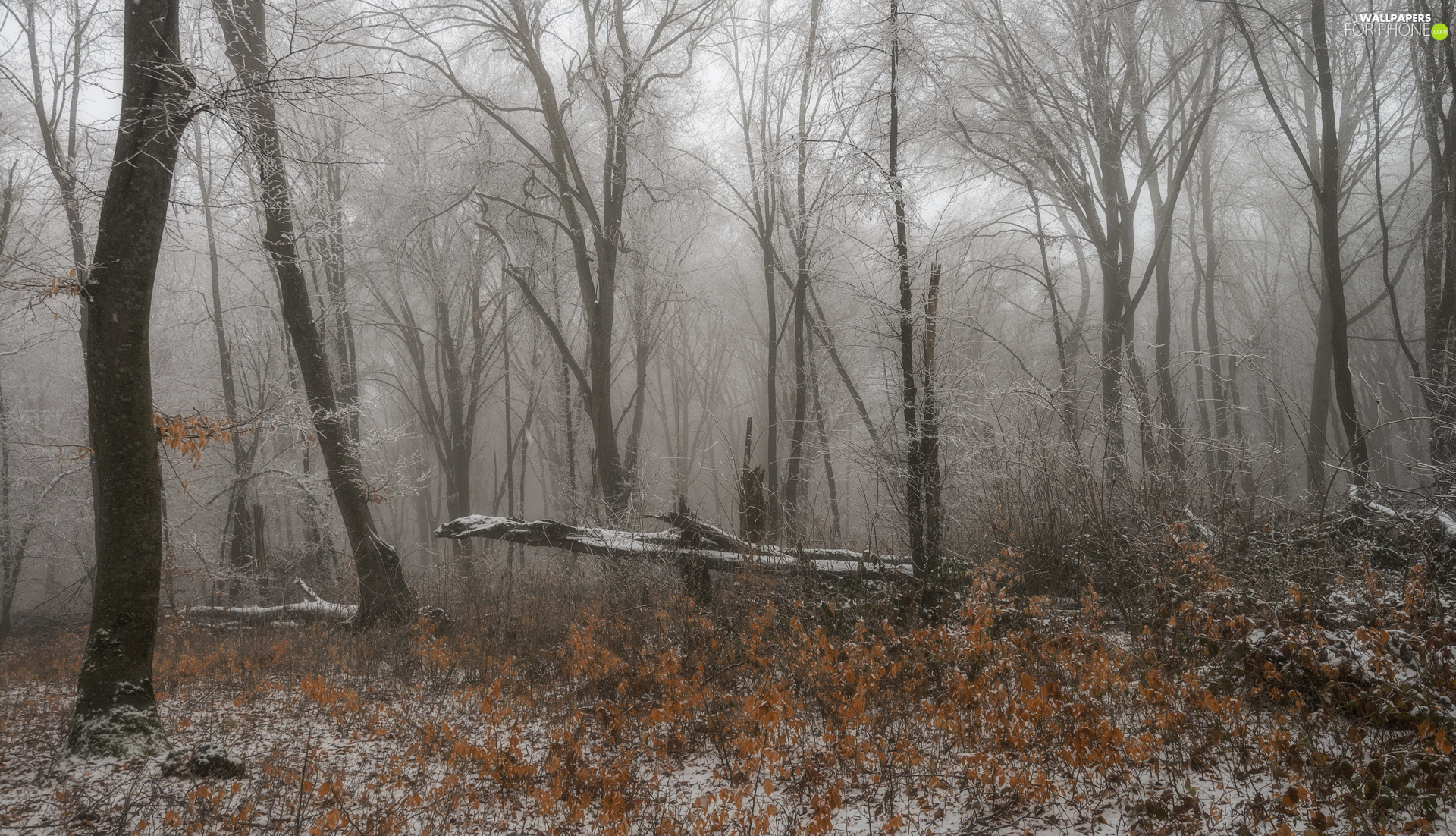 forest, trees, fallen, viewes, winter, Fog, Leaf