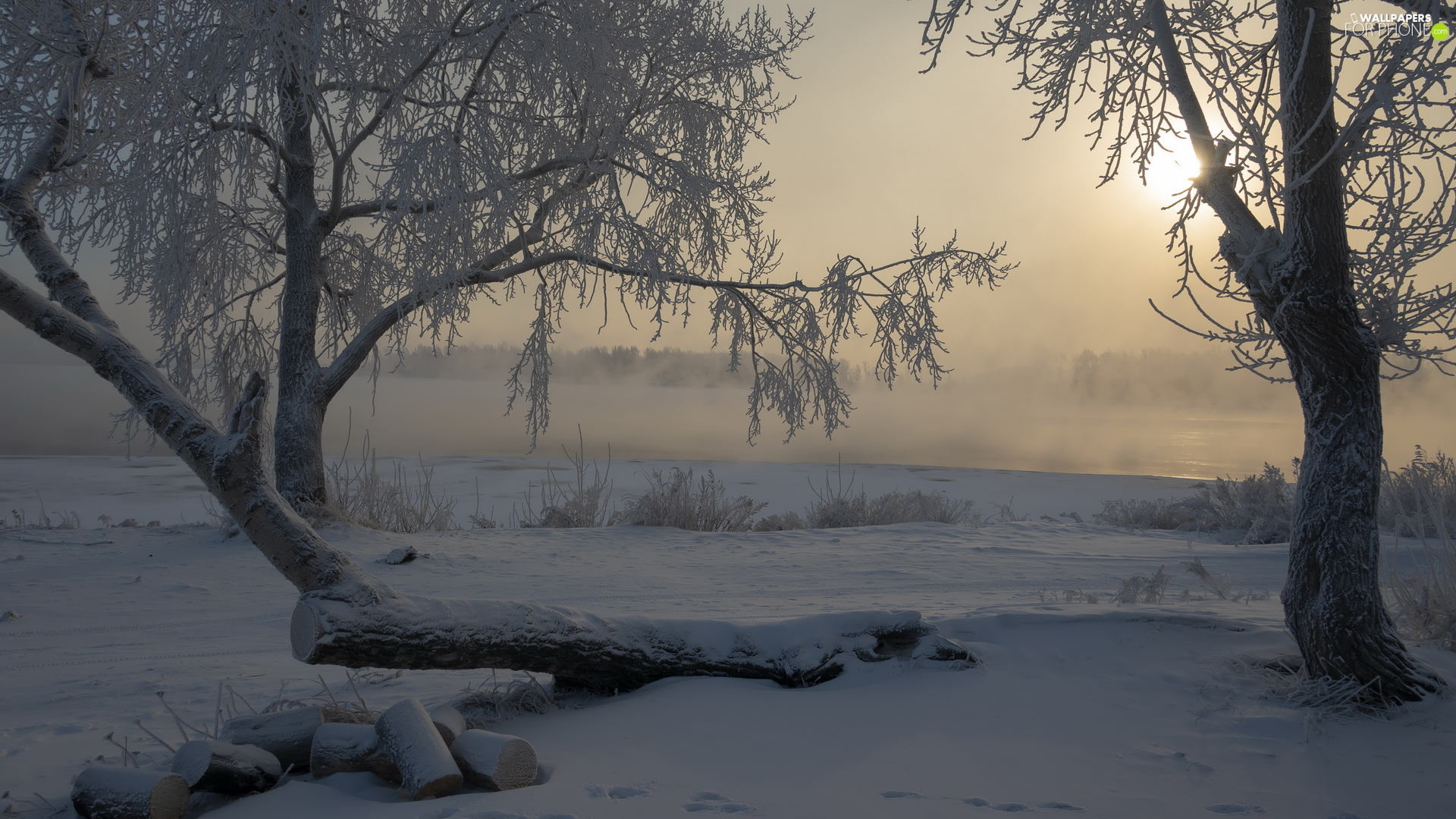 River, frosty, log, trees, laying, Fog, winter, viewes