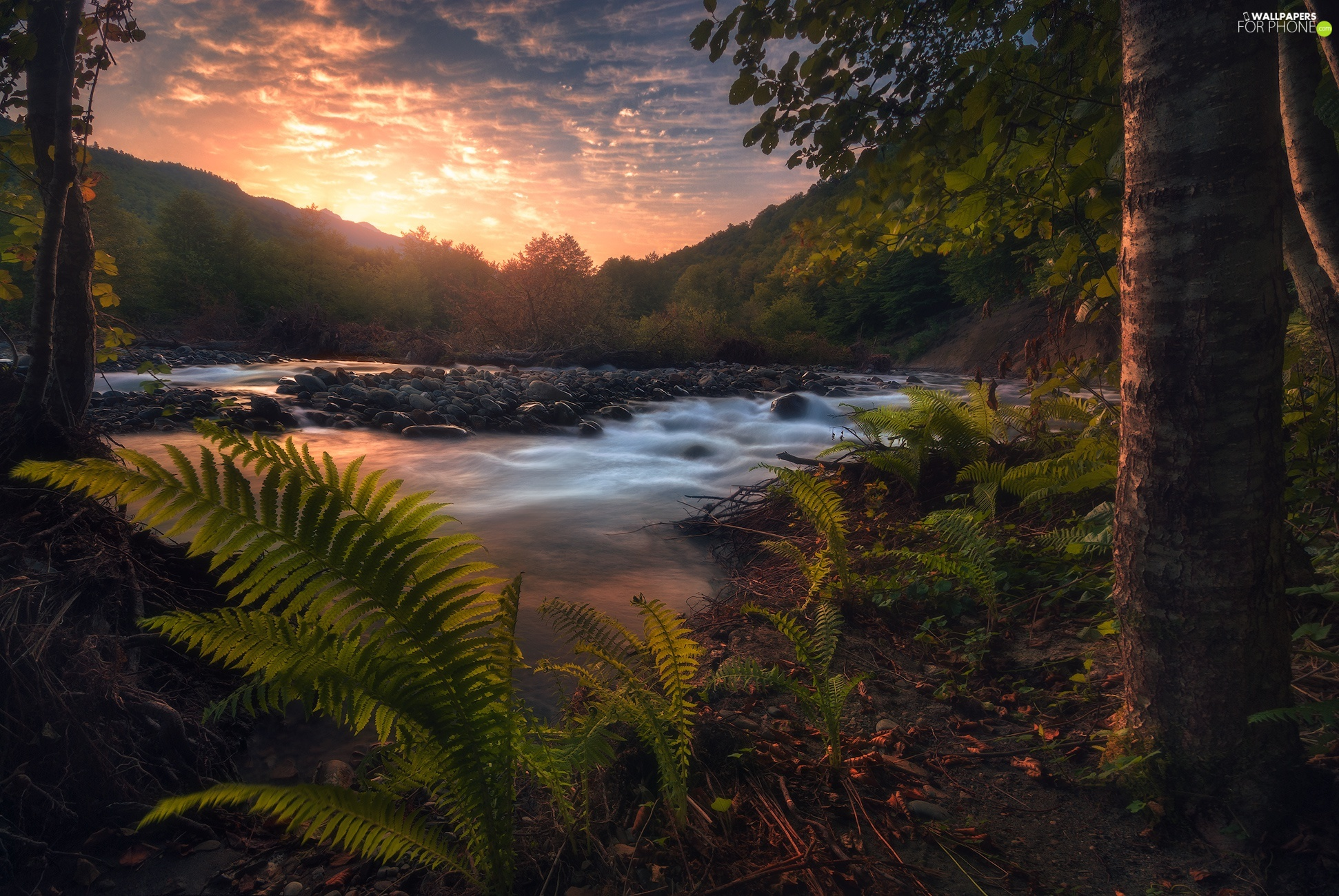 Stones, Great Sunsets, viewes, fern, trees, River