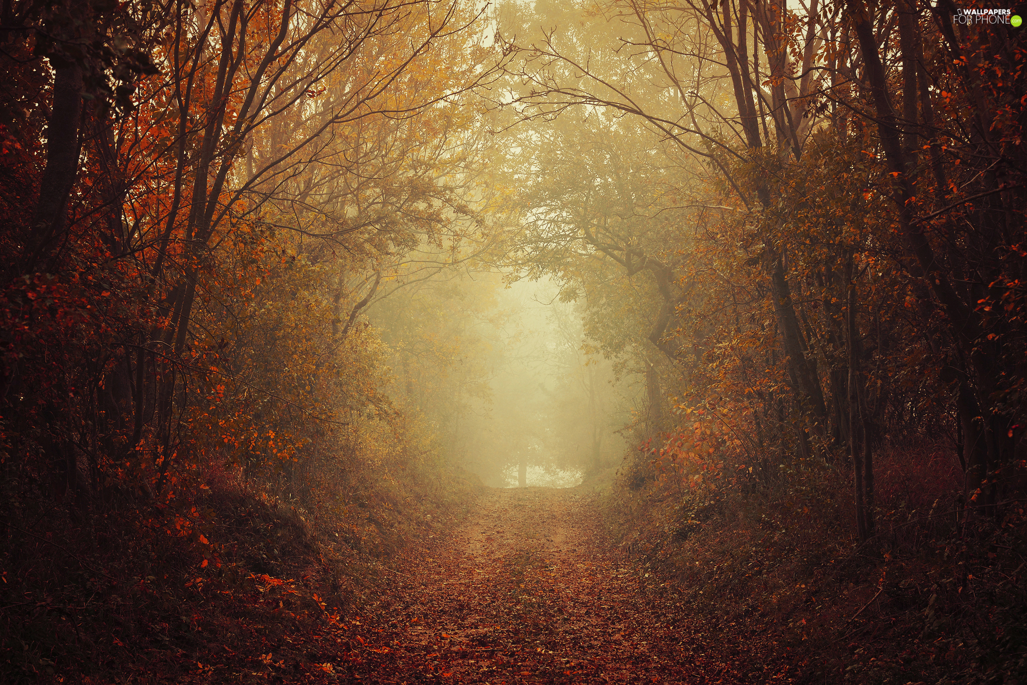 viewes, fallen, autumn, Leaf, Fog, trees, forest, Way