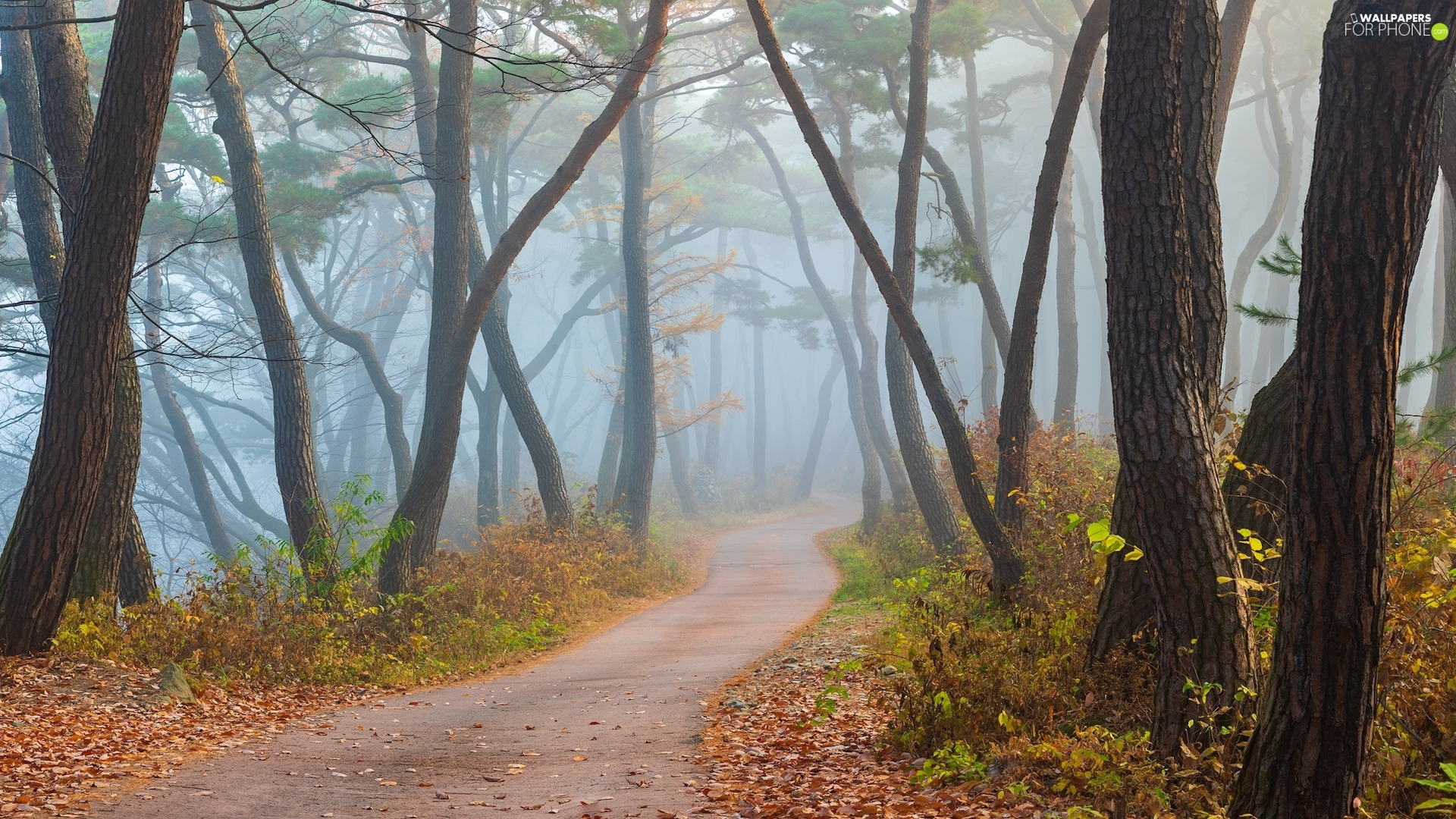 Fog, Way, viewes, forest, trees
