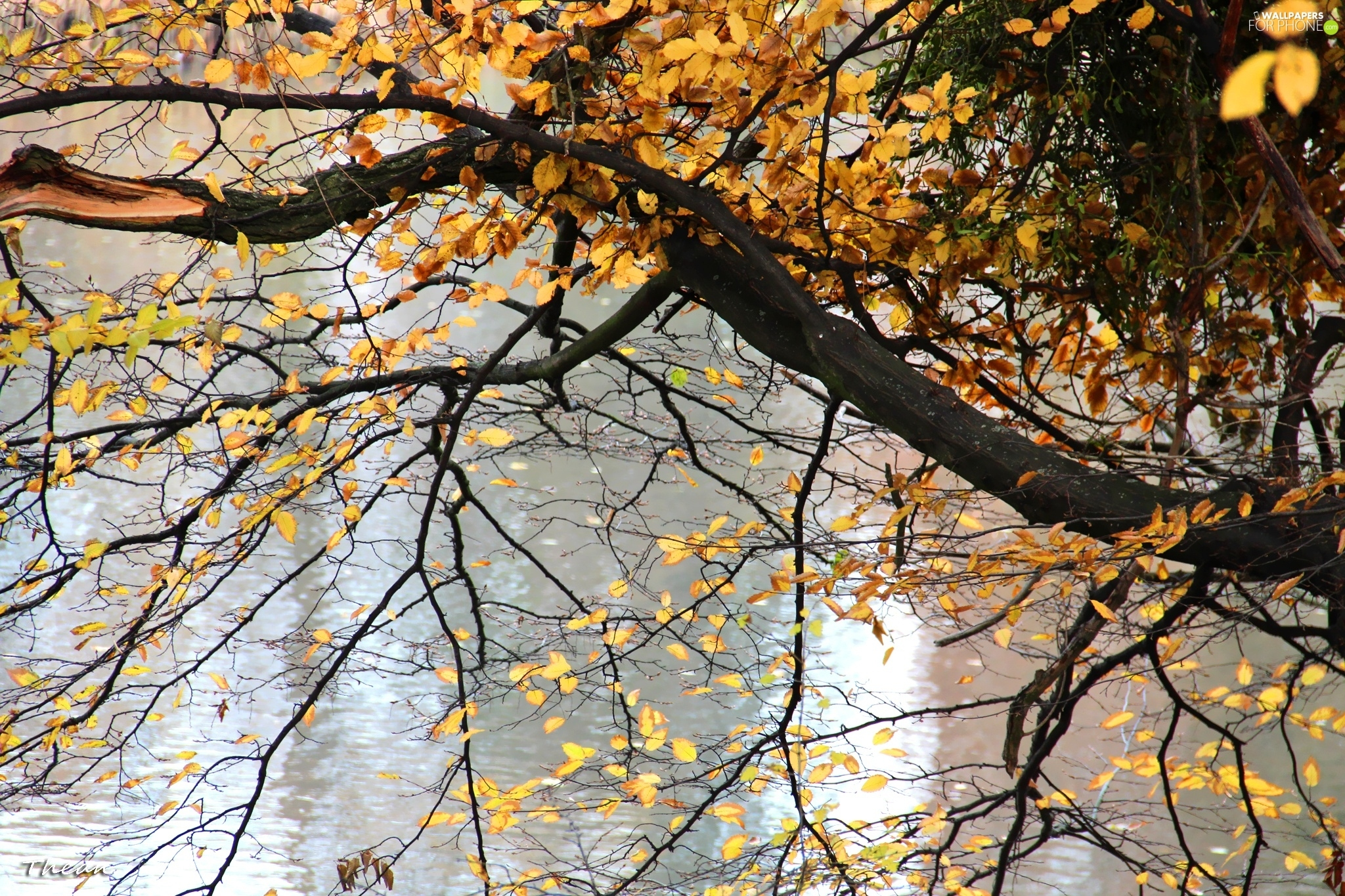 water, trees, Yellow, Leaf, autumn, by